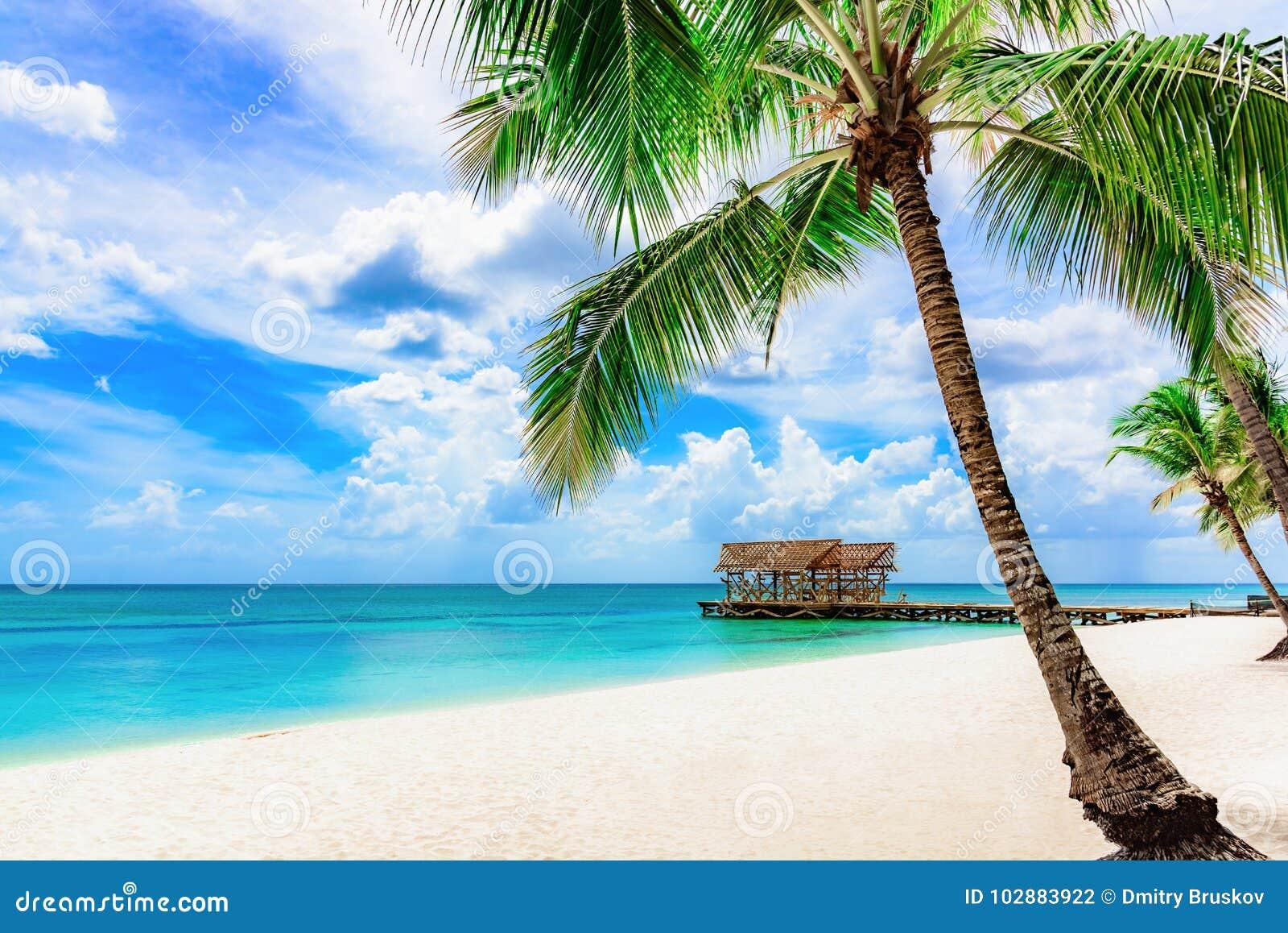 Hd Tropical Island Beach Paradise Wallpapers And Backgrounds: Paradise Tropical Beach Palm The Caribbean Sea Stock Photo