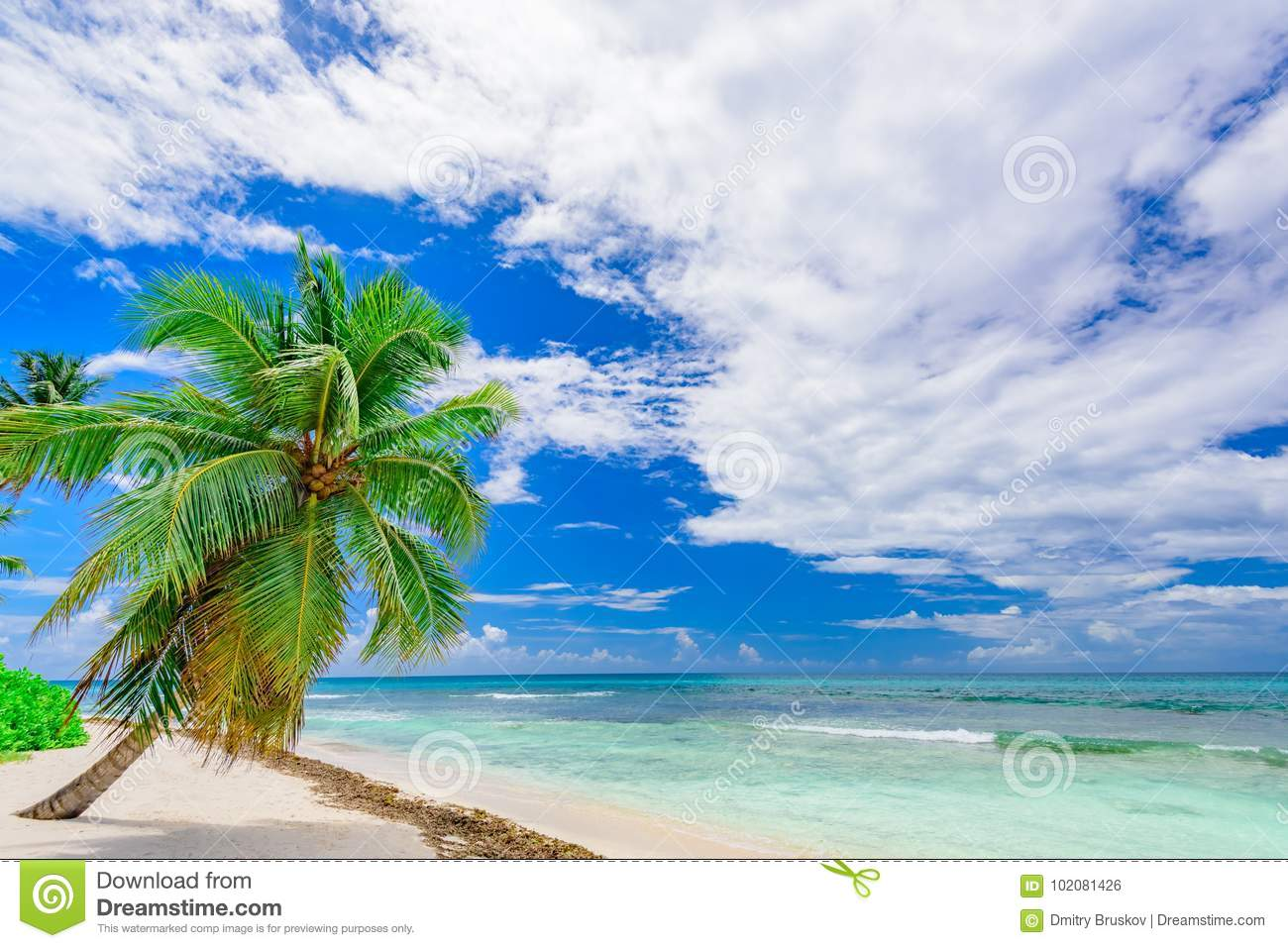 Download Paradise Tropical Beach Palm The Caribbean Sea Stock Photo - Image of relax, nextraordinary: 102081426