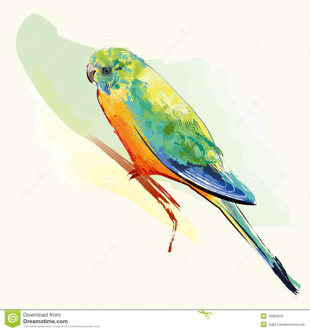 parakeet bird with colorful feathers stock photo image