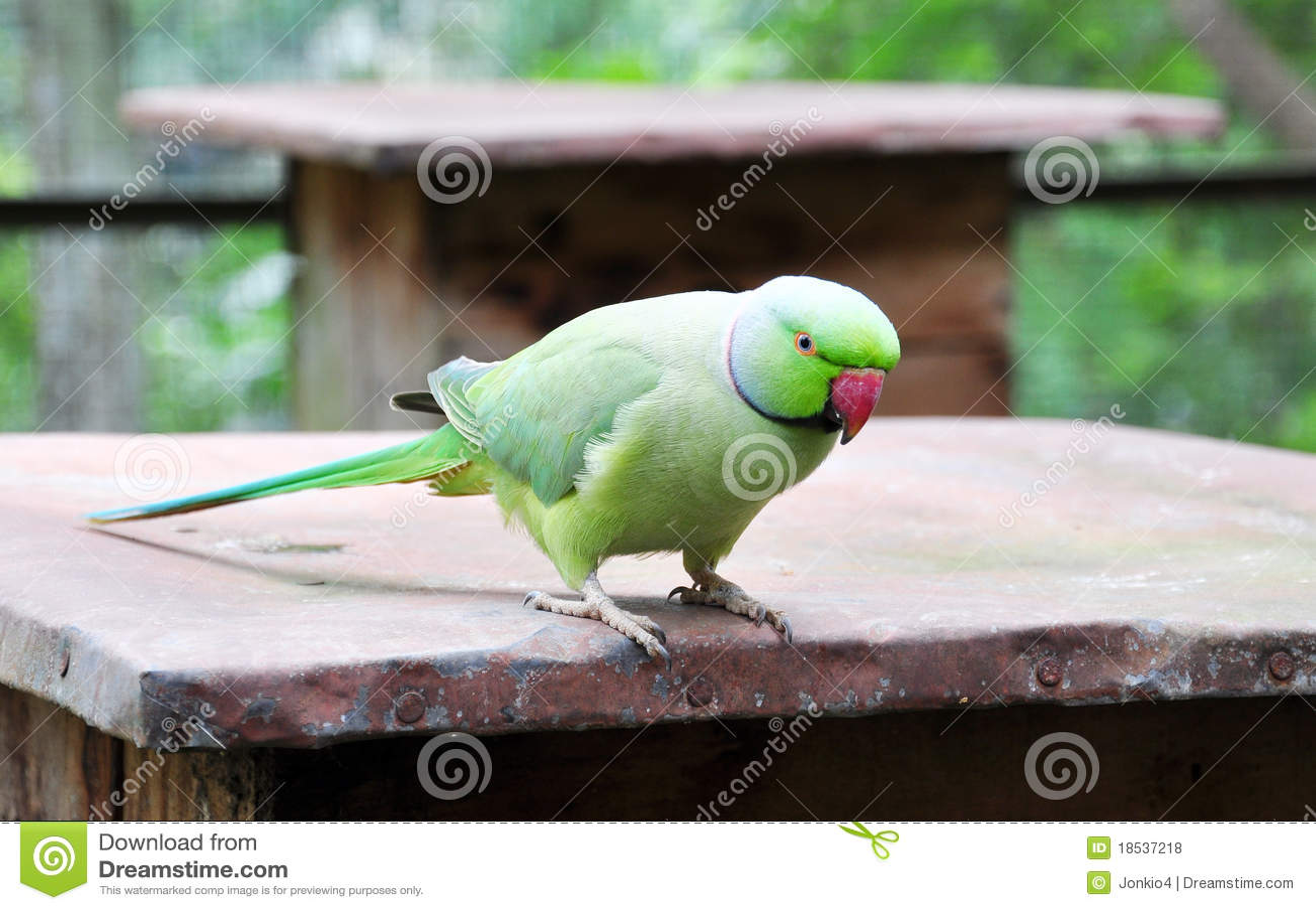Parakeet verde
