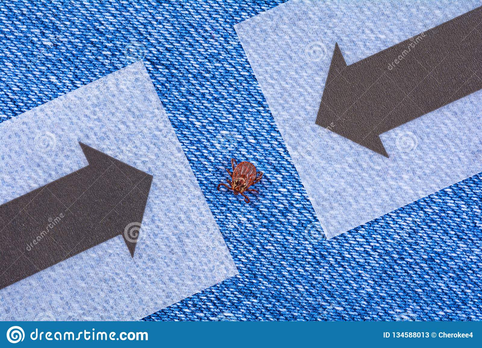Parasite mite sitting on a jeans. Danger of tick bite.