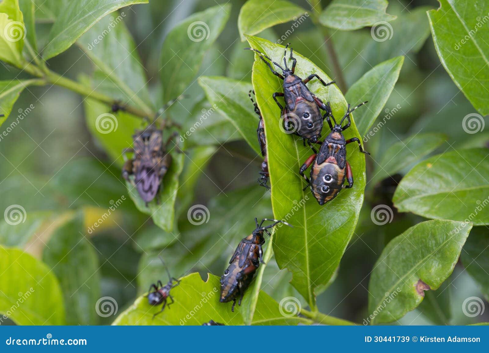 Parasites de jardin