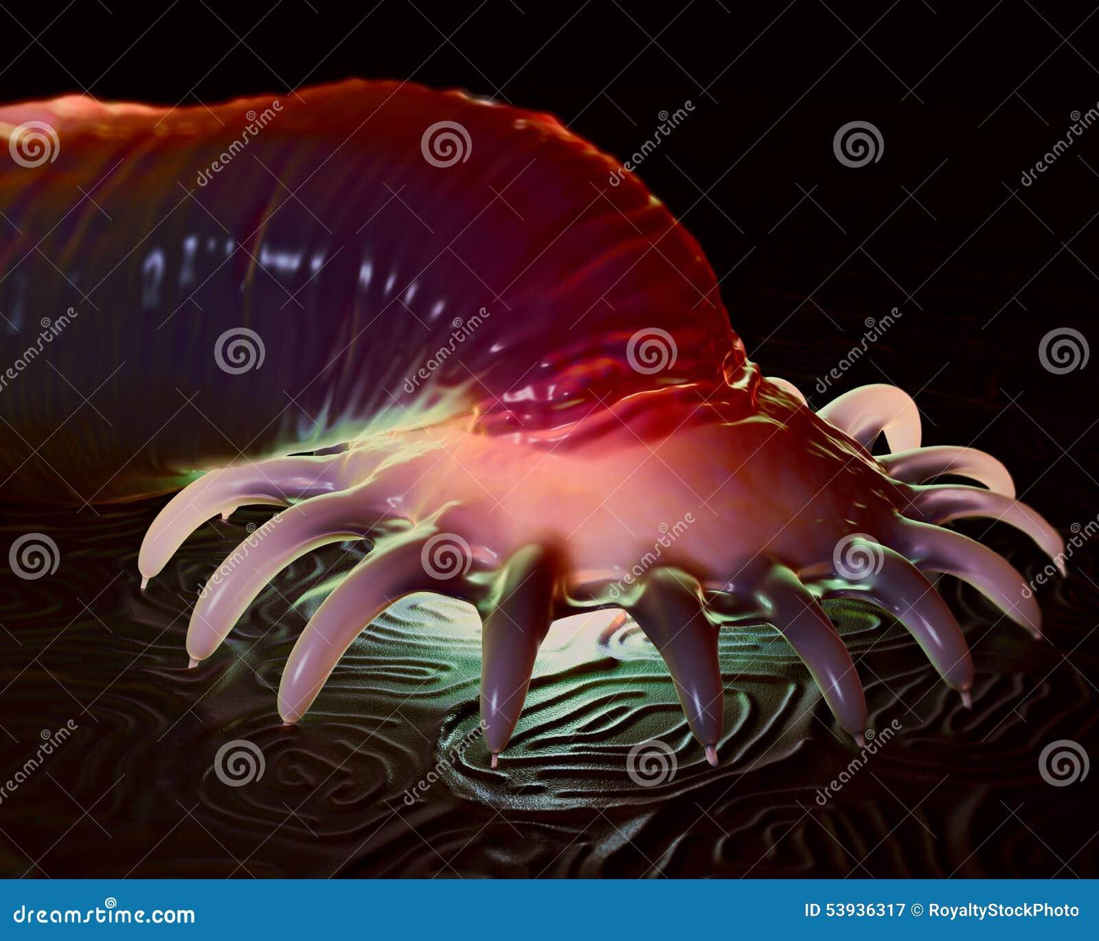 Parassita acquatico di Gyrodactylus sulla pelle di un salmone