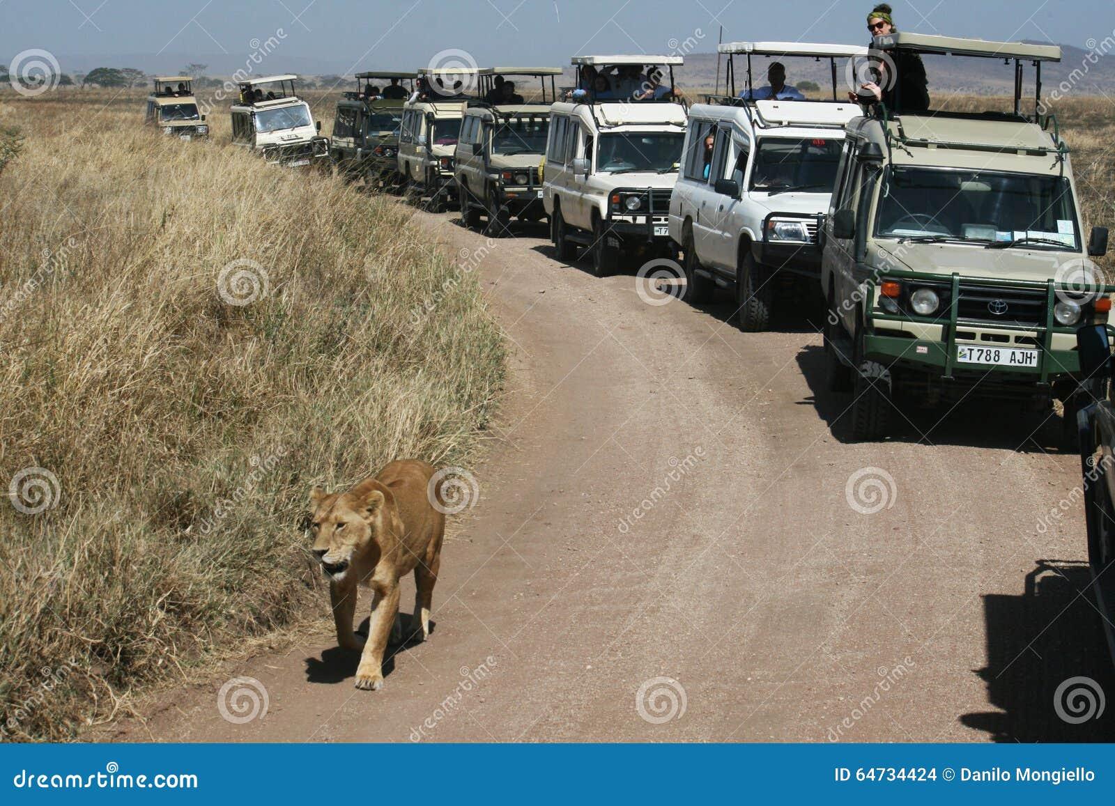 Parata del leone