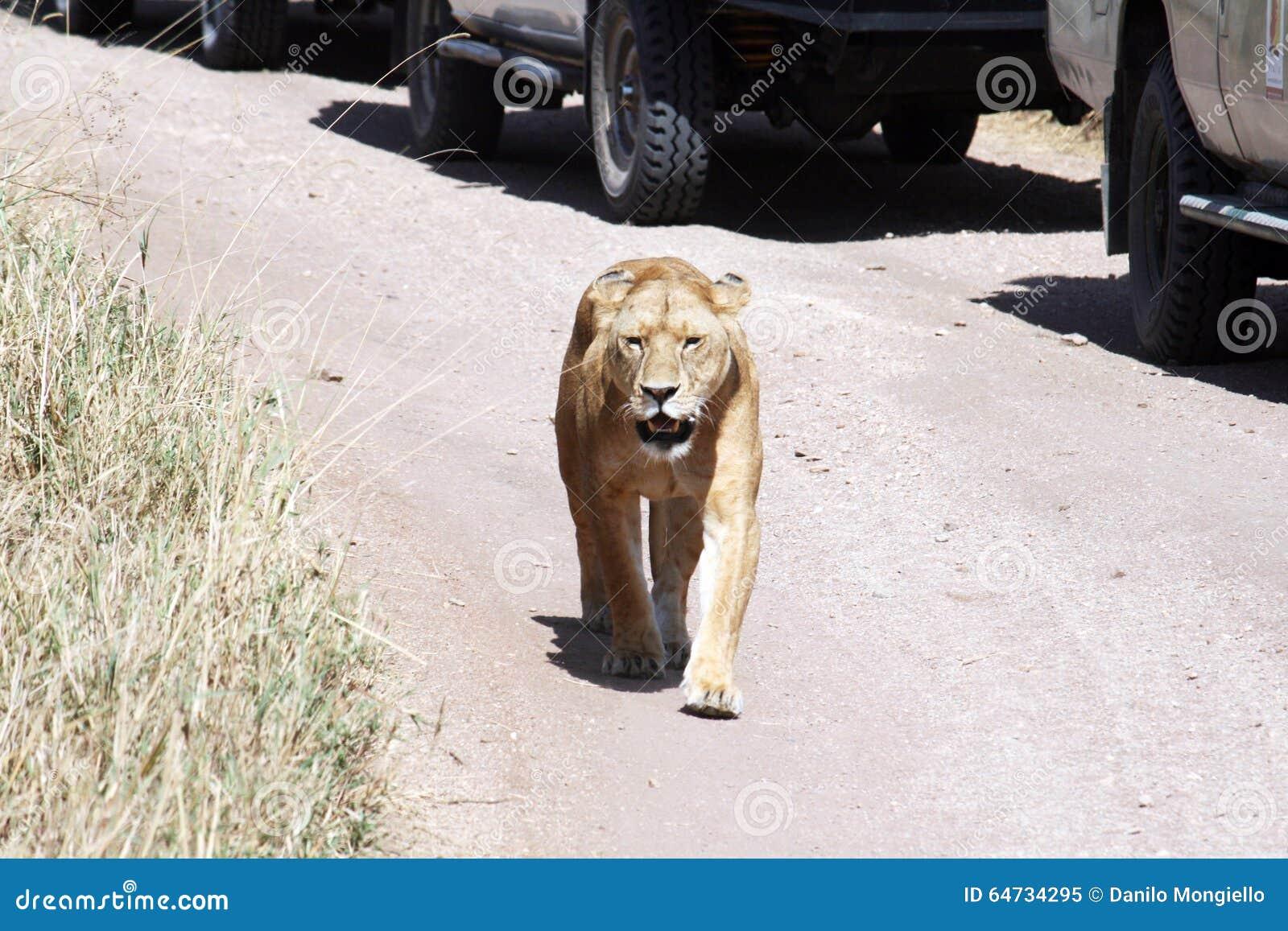 Parata della leonessa