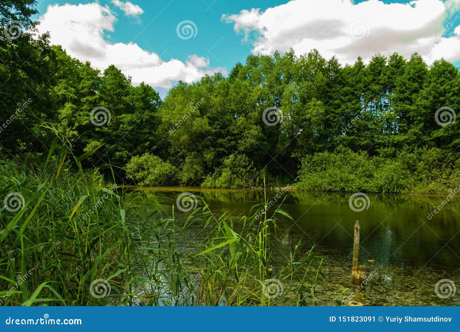 Parc avec un lac et de vieux arbres