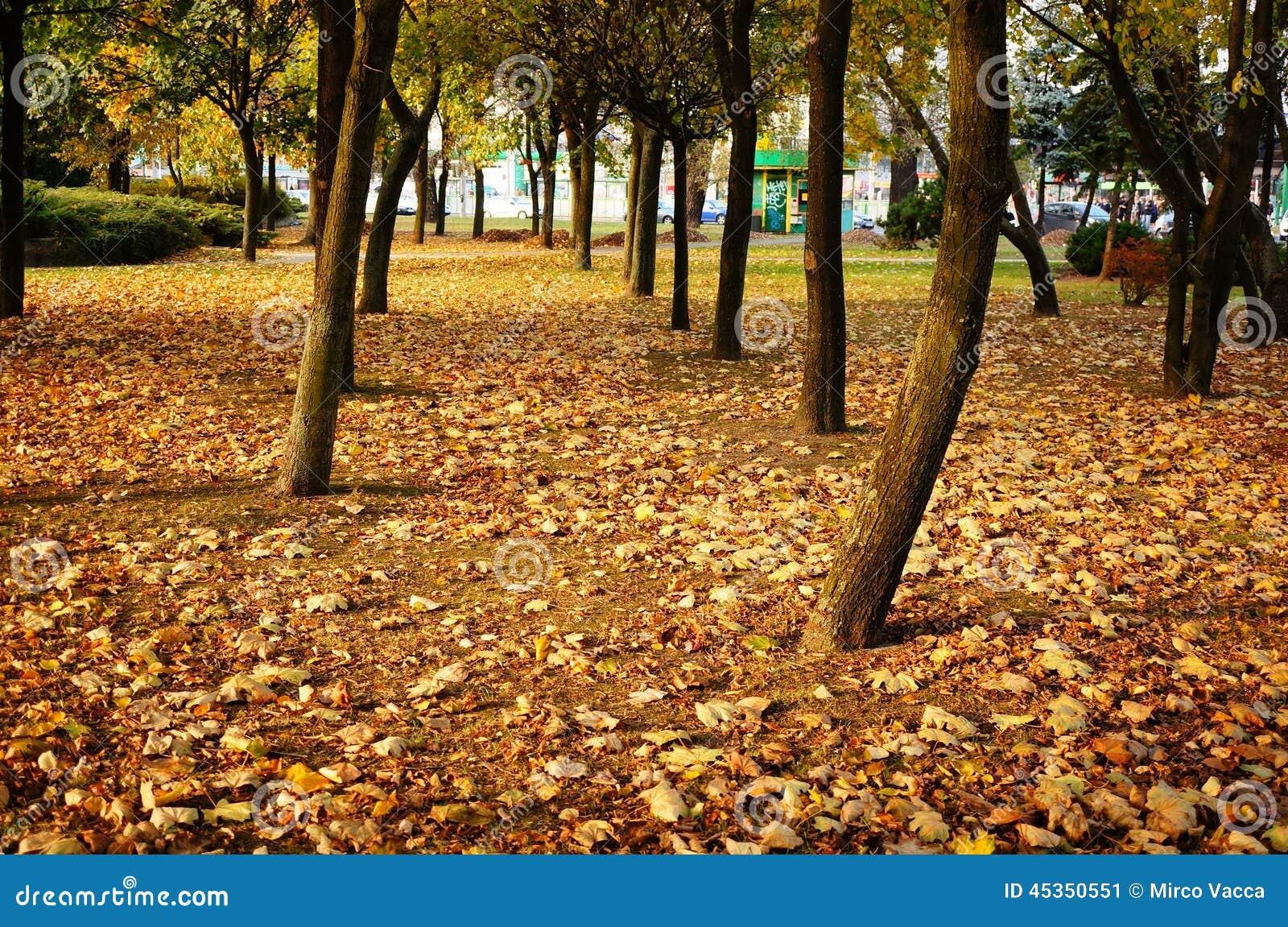 Parc d automne