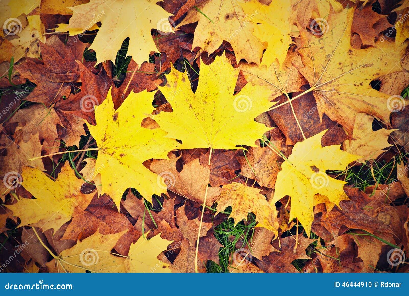 Parc d 39 automne rectifi avec des feuilles d 39 automne grande - Image feuille automne ...