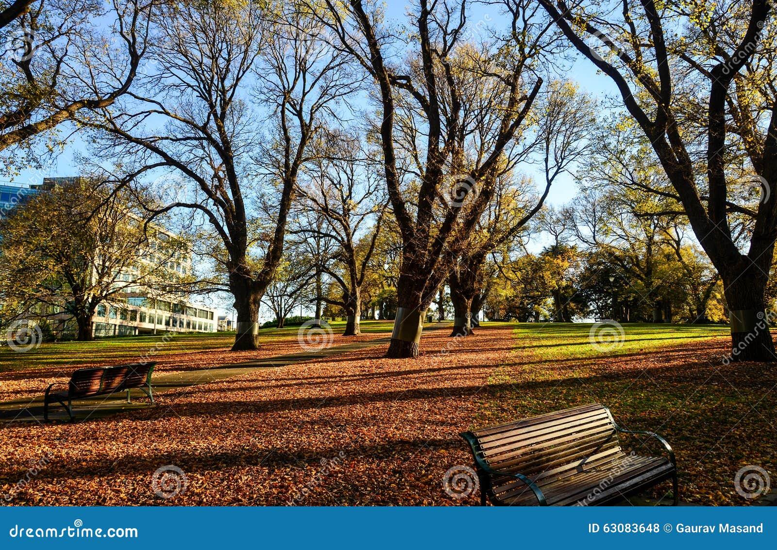 Download Parc De Ville Dans Le Matin Photo stock - Image du constructions, commercial: 63083648