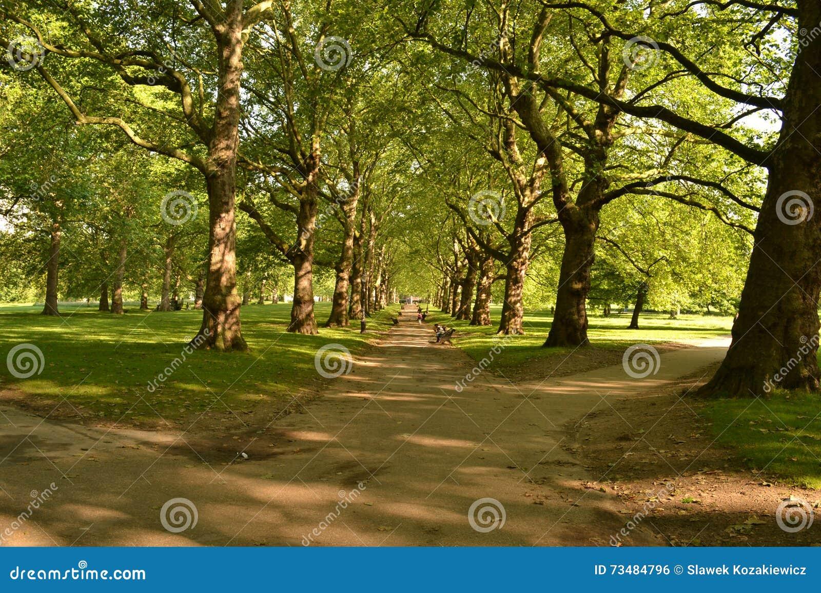 Parc ensoleillé Londres de vert d avenue d arbres grands
