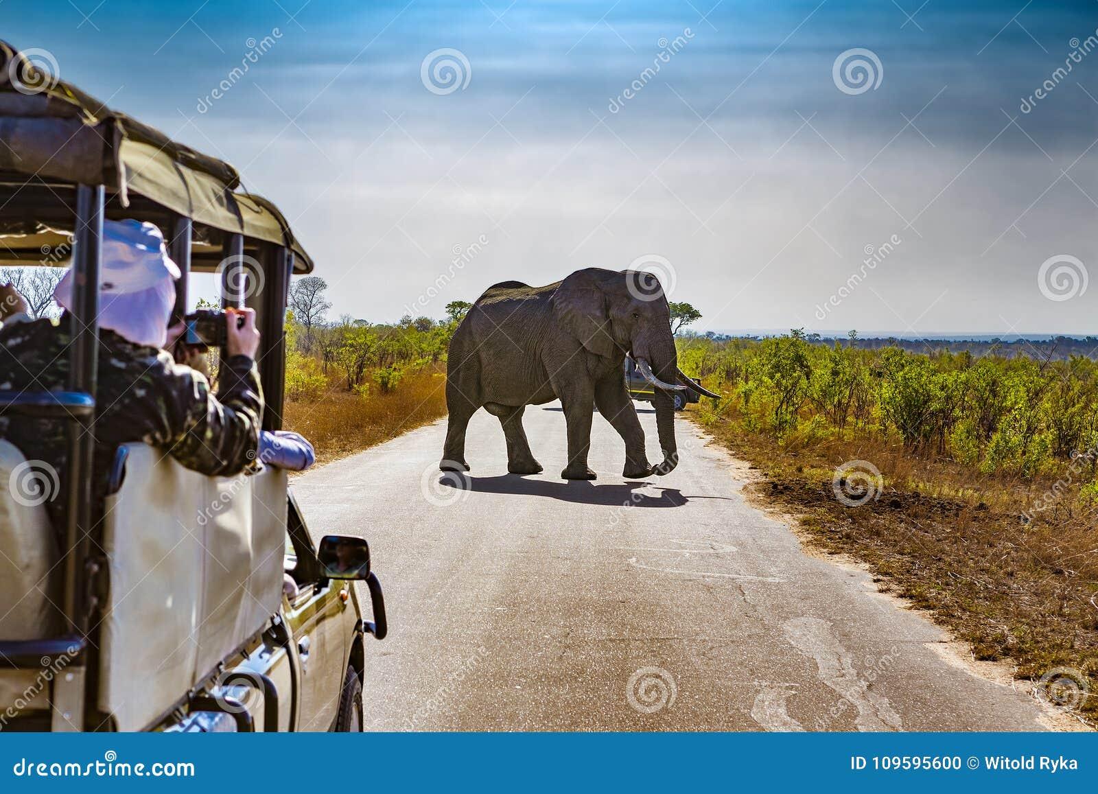 Parc national de Kruger, Afrique du Sud