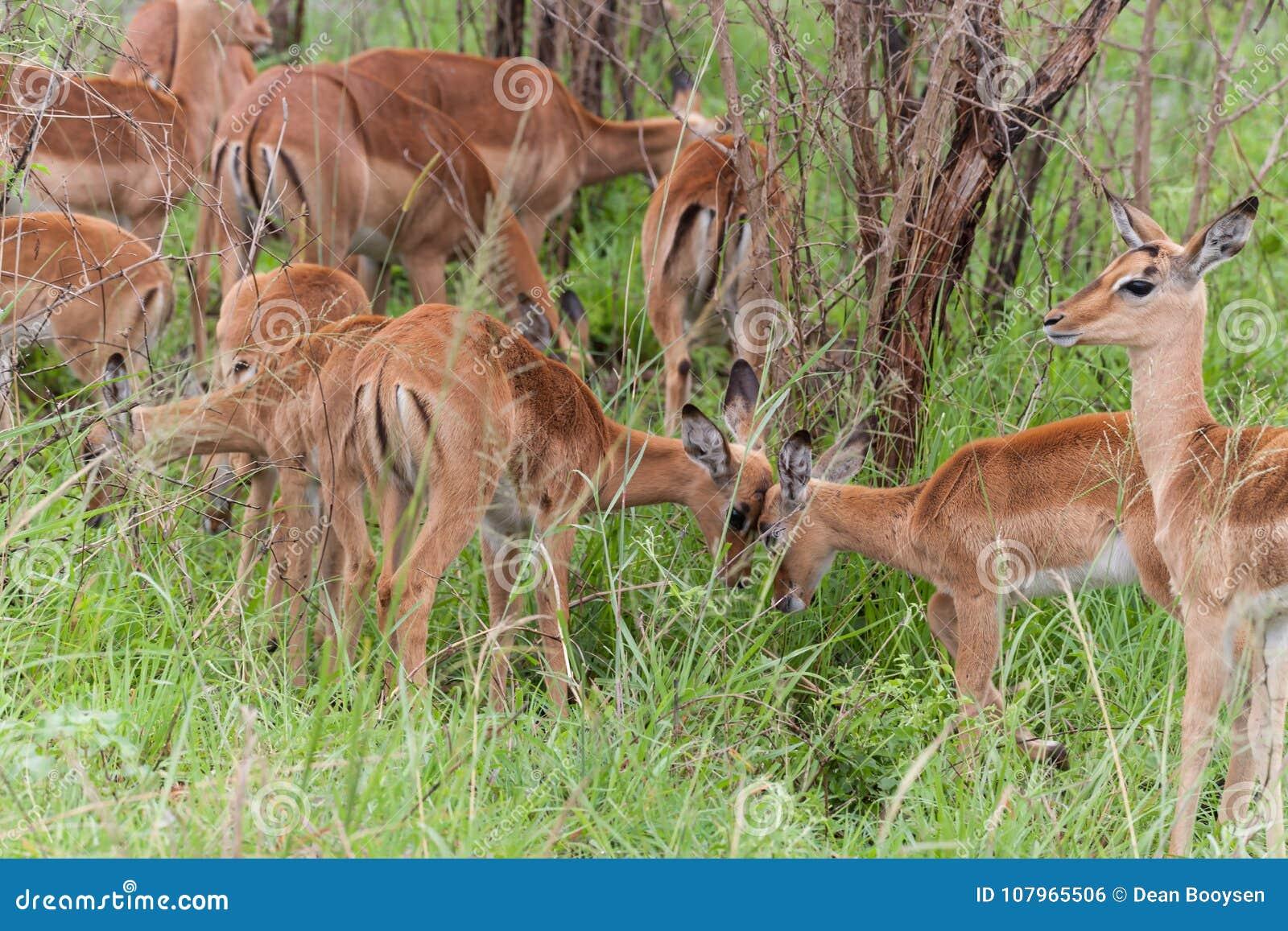 Parc national de Kruger, Mpumalanga, Afrique du Sud