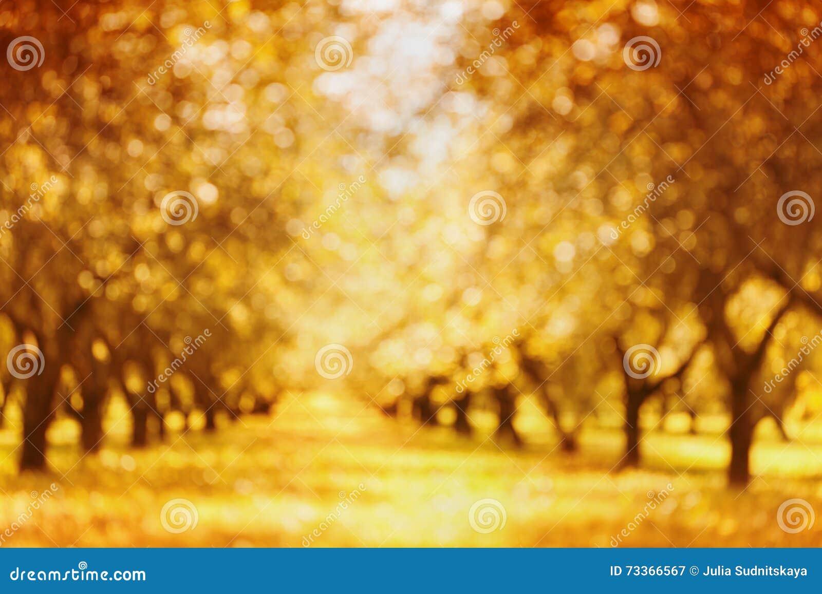 Parc Ou Jardin Defocused D\'automne Pour Le Fond De Bokeh Tronc ...