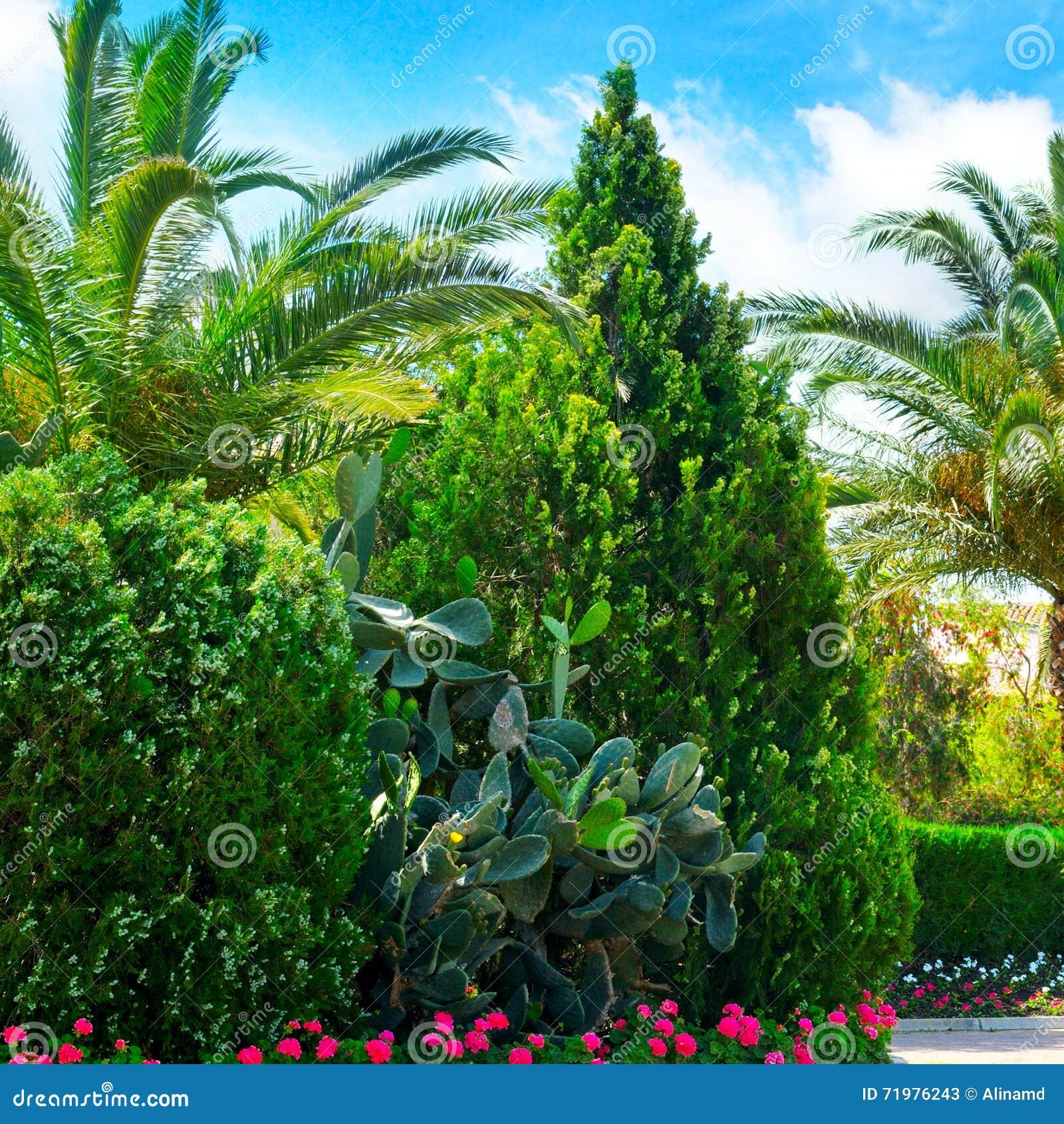 Foto Di Piante Sempreverdi parco con le palme e le piante sempreverdi immagine stock