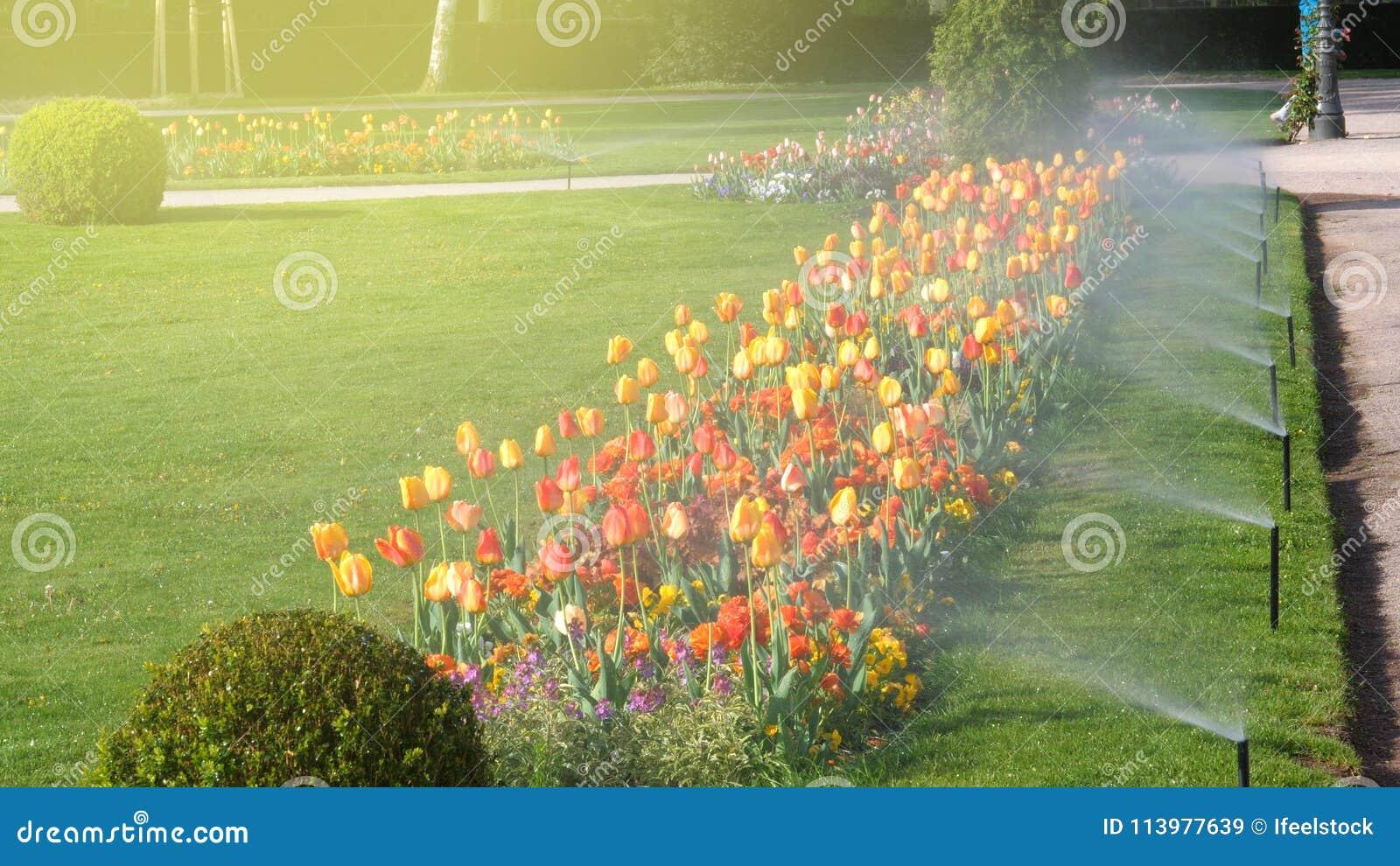 Parco di lusso del giardino astuto con il sistema automatico di irrigazione a pioggia