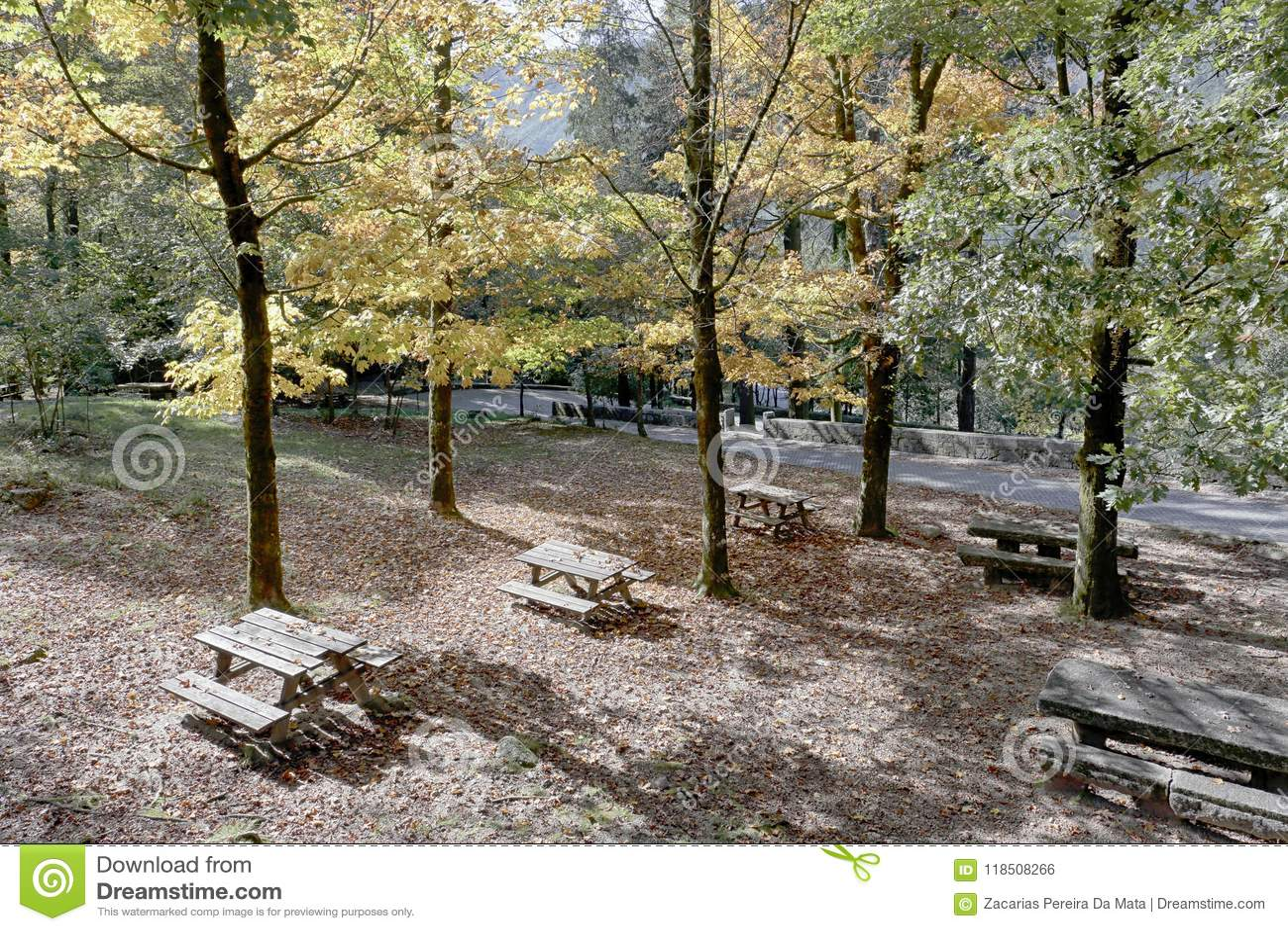 Parco di picnic della foresta