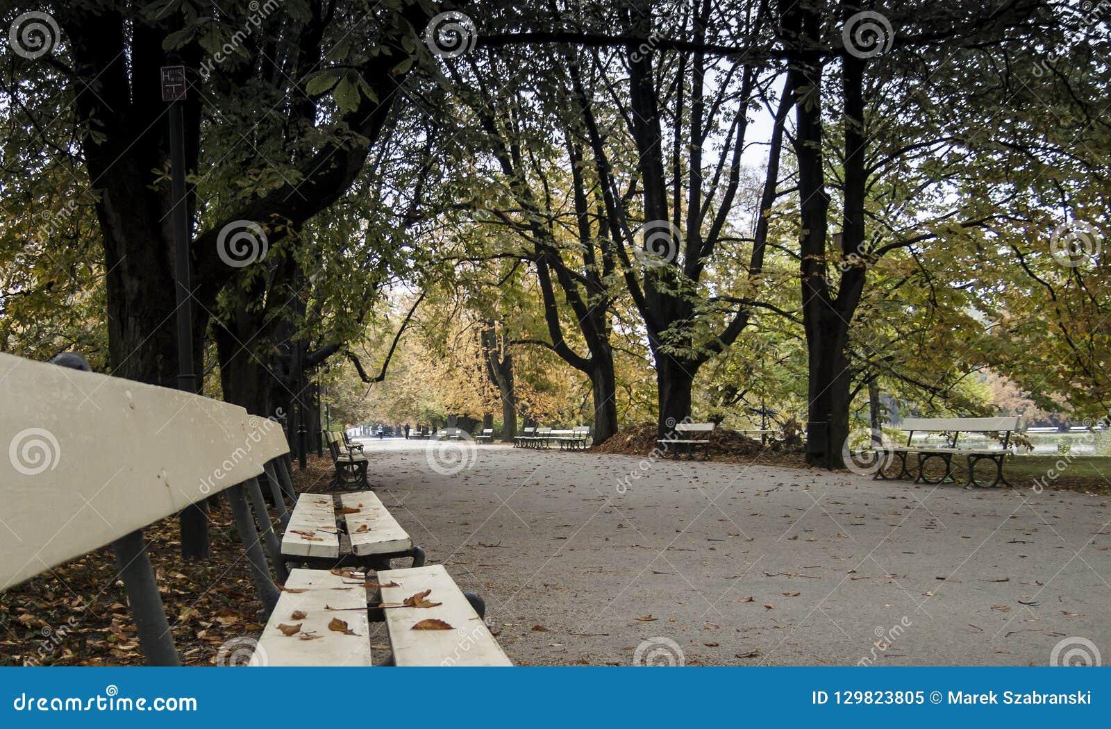 Parco di Ujazdowski a Varsavia - vicolo del parco con i banchi in autunno