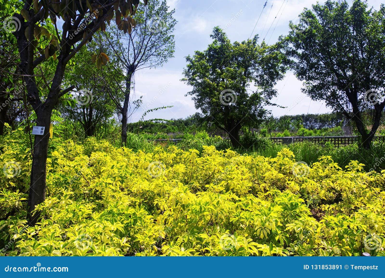 Parco ecologico Shenzhen Cina della mangrovia di Futian