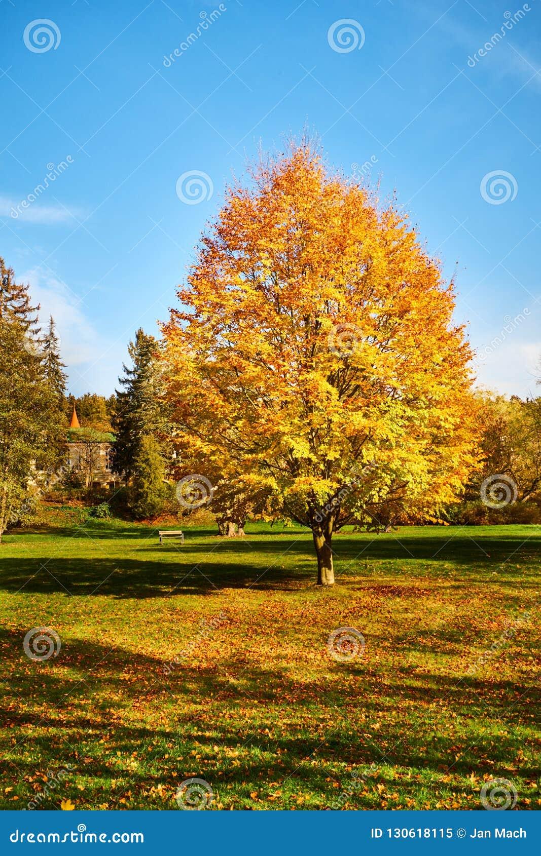 Parco in Marienbad