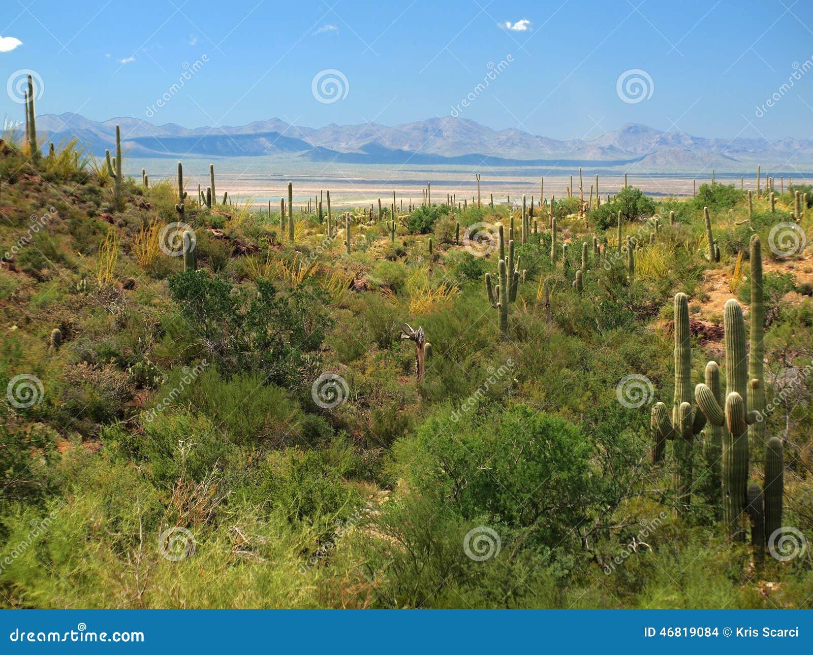 Parco nazionale del saguaro, AZ