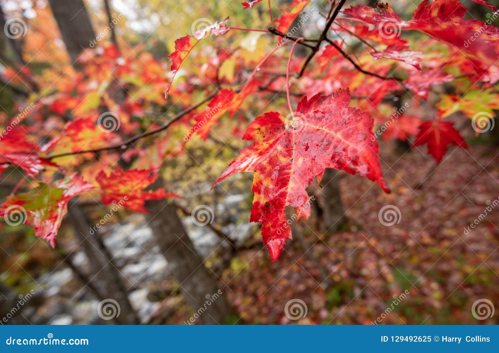 Parco nazionale di acadia in autunno
