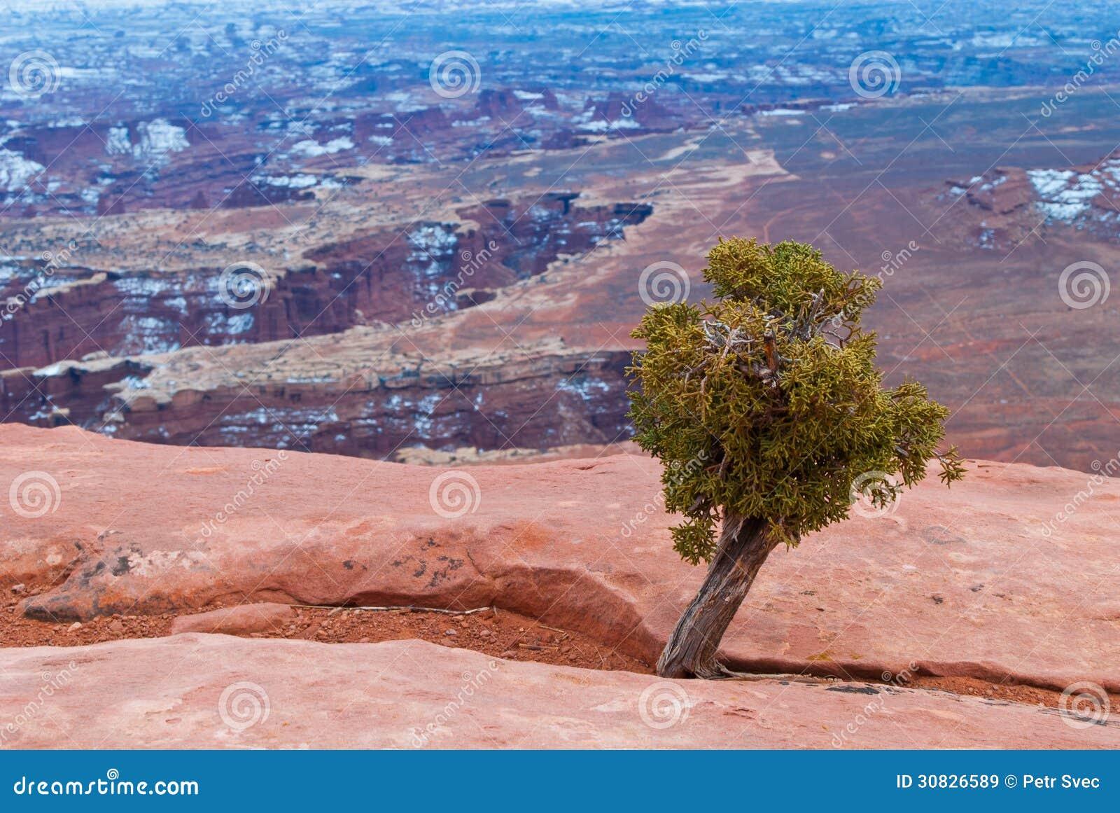 Parco nazionale di Canyonlands nell inverno