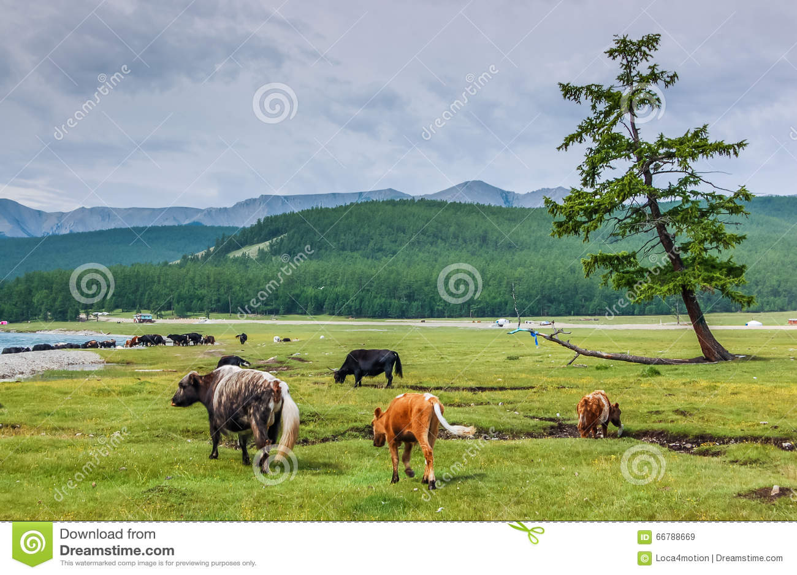 Parco nazionale di Khovsgol, Mongolia
