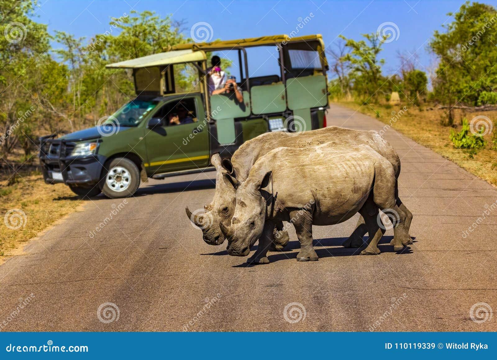 Parco nazionale di Kruger, Sudafrica