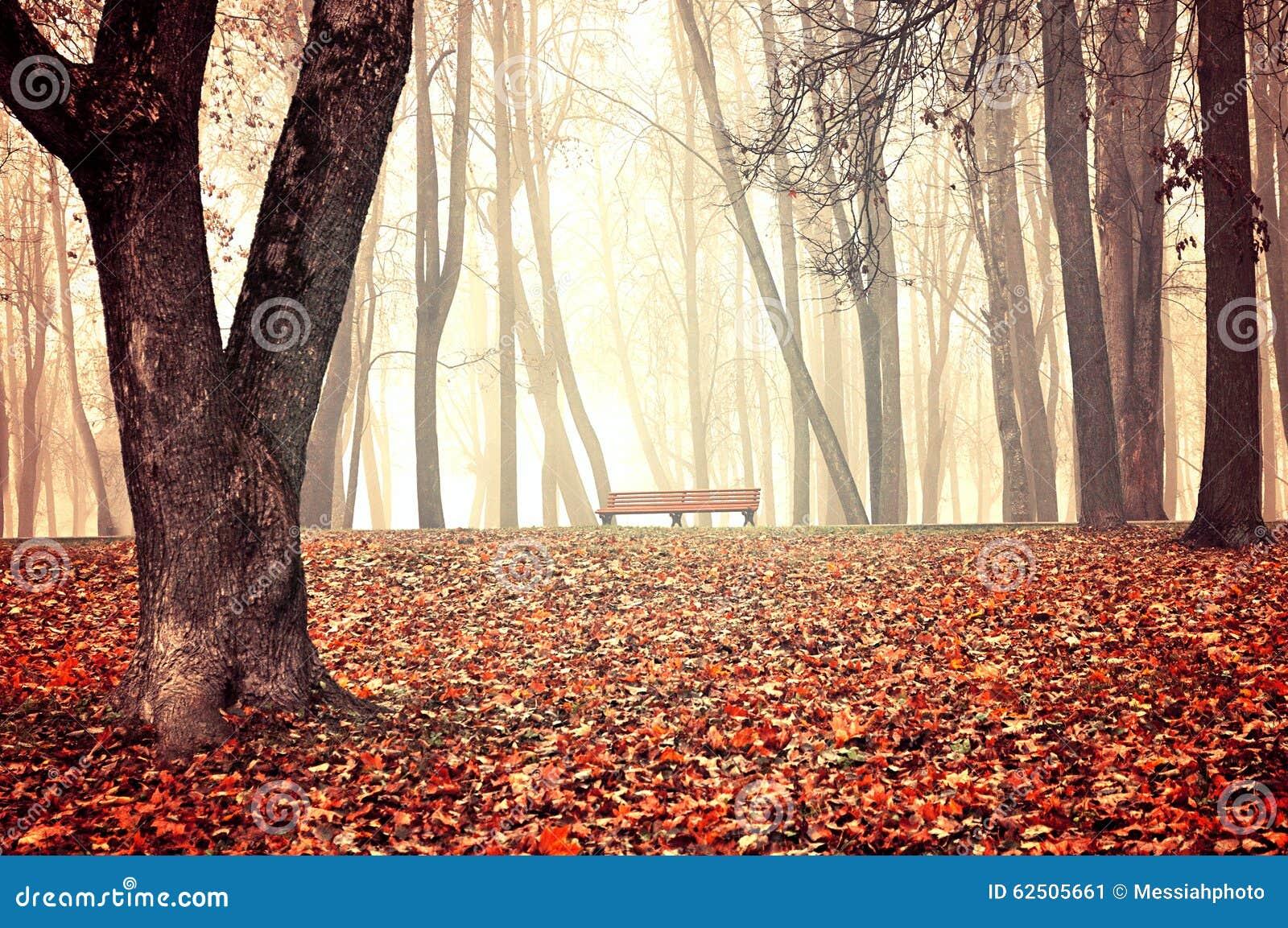 Parco nebbioso di autunno - bello paesaggio di autunno