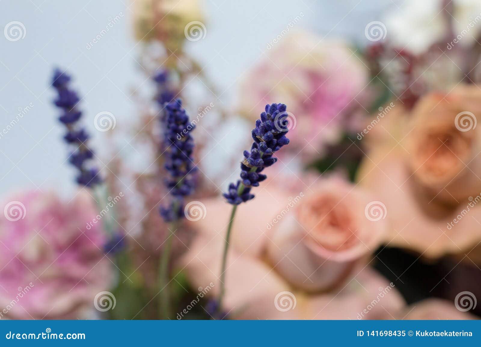 Parecchi rami di lavanda fresca con le rose rosa su fondo Decorazione di evento con i fiori freschi
