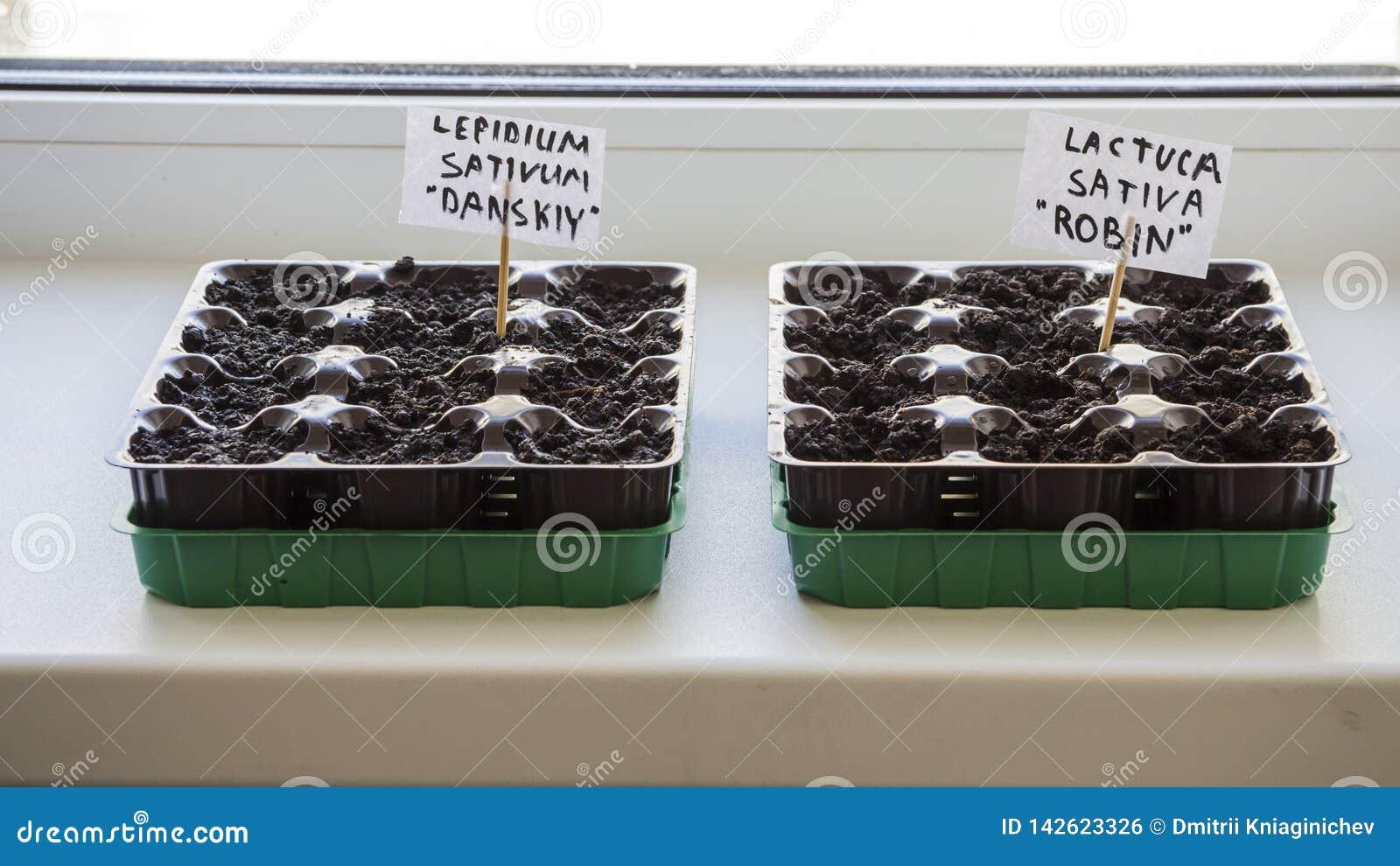Parecchi recipienti di plastica con il suolo del giardino Piantina-immagine piantata