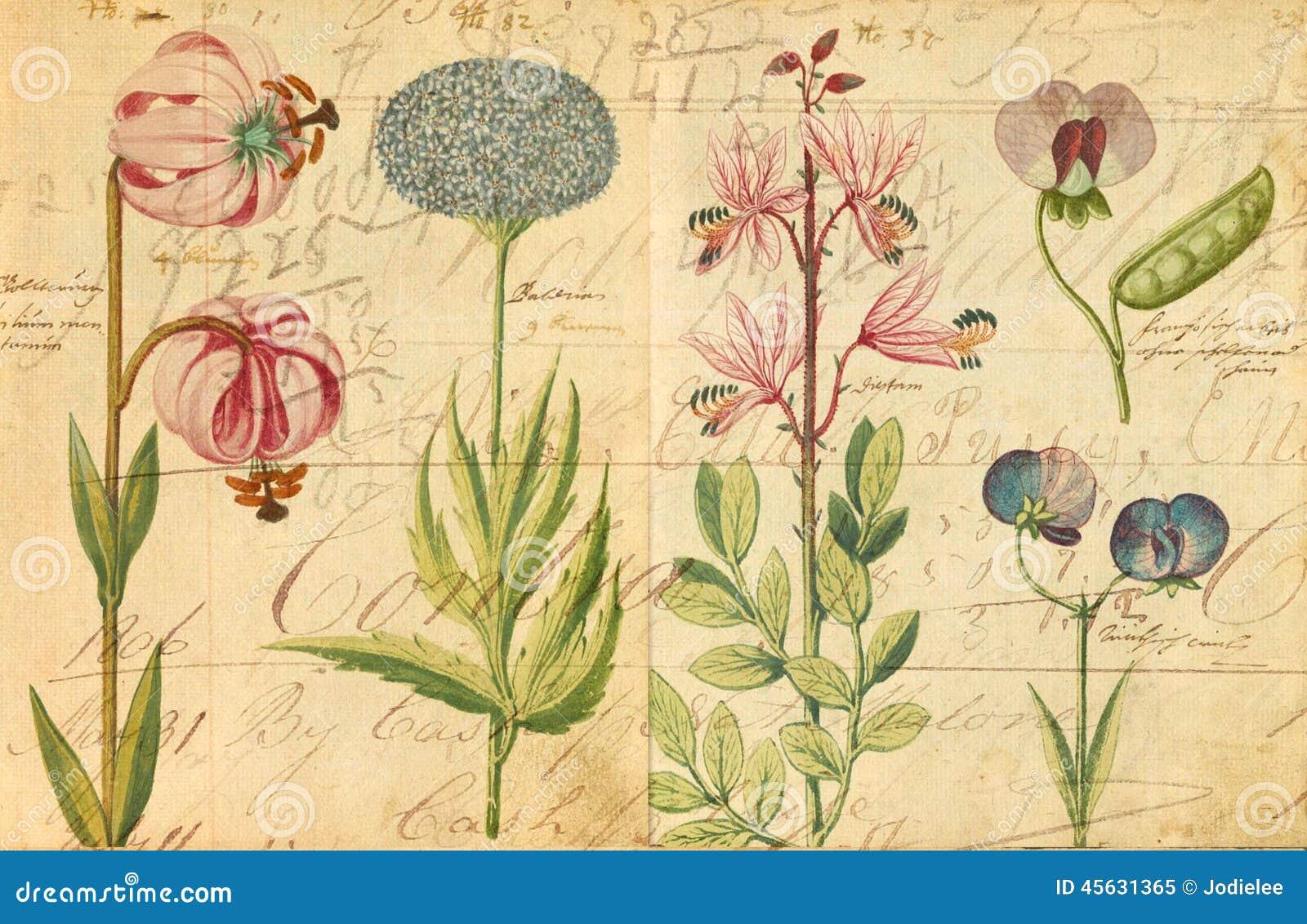 Pared Botánica Antigua Art Print Illustration Stock de ilustración ...