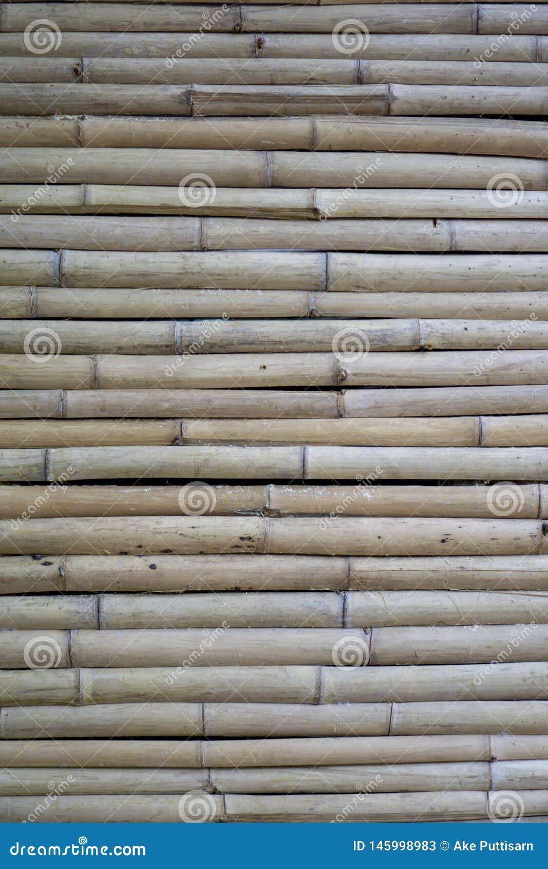 Pared de bamb? seca bambú marrón claro del ‹del †en ‹tamaño pequeño, dispuesto del horizontalâ€