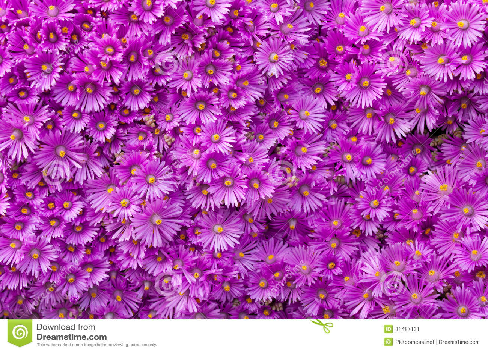 Pared de flores púrpuras