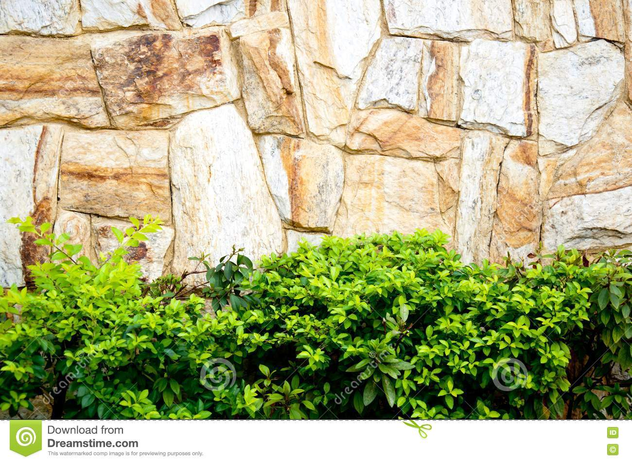 pared de piedra y plantas textured foto de archivo