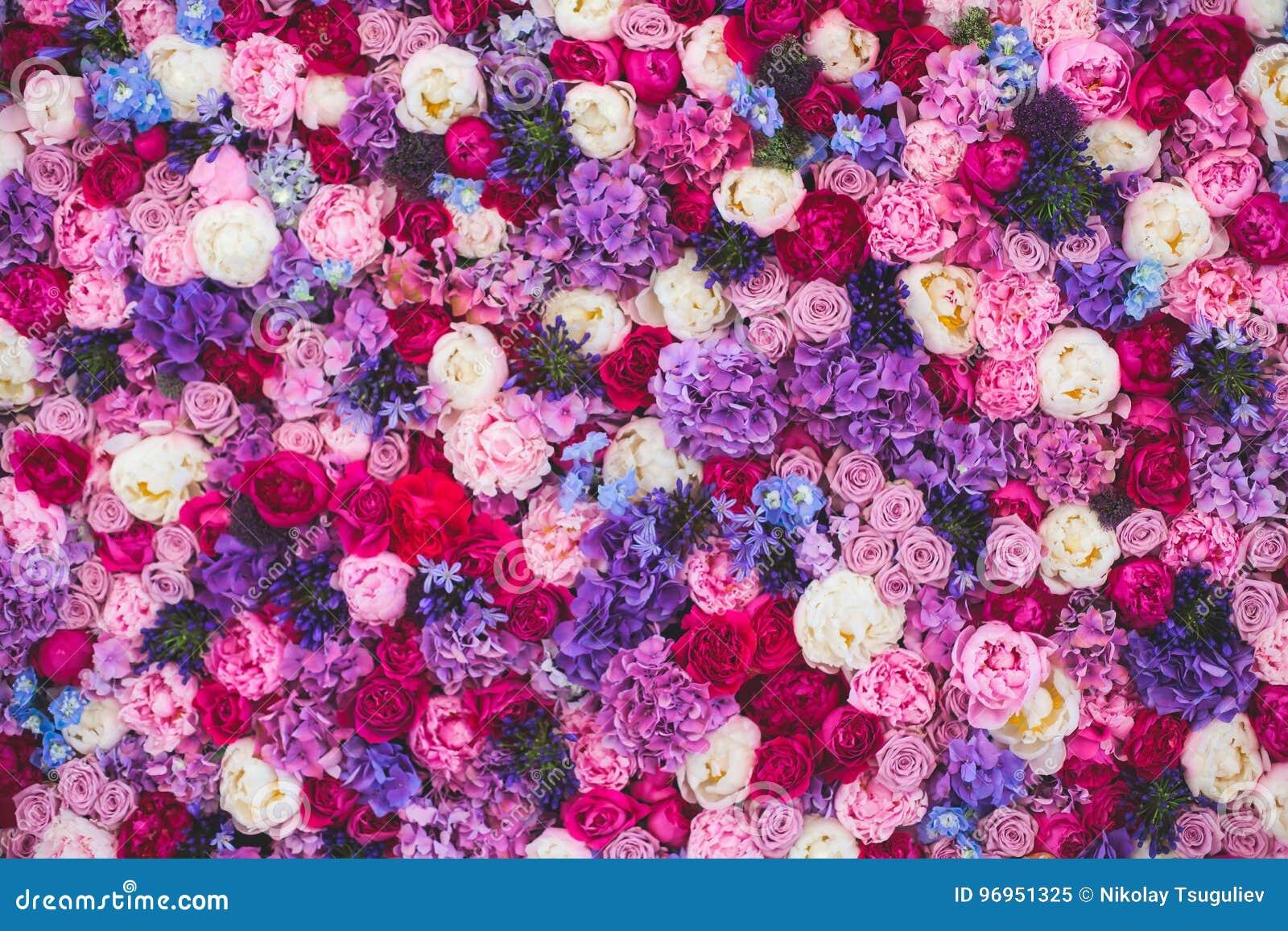 Parede bonita feita de flores roxas violetas vermelhas, rosas, tulipas, imprensa-parede, fundo