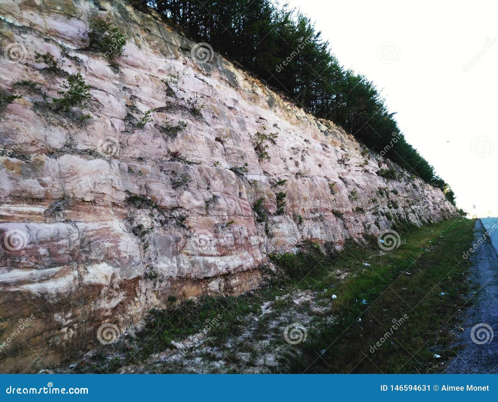 Parede coberta árvore da rocha