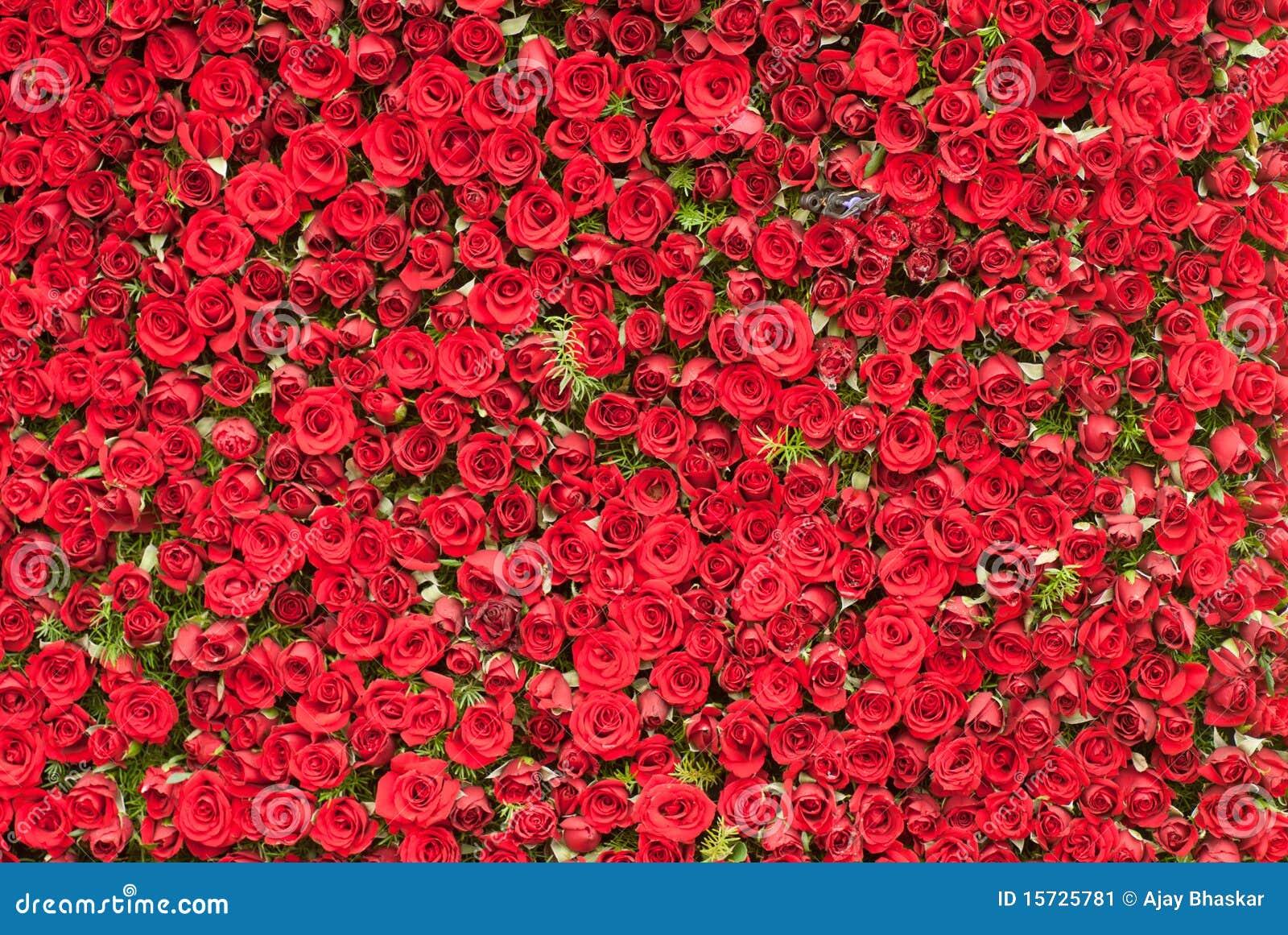 Parede das rosas