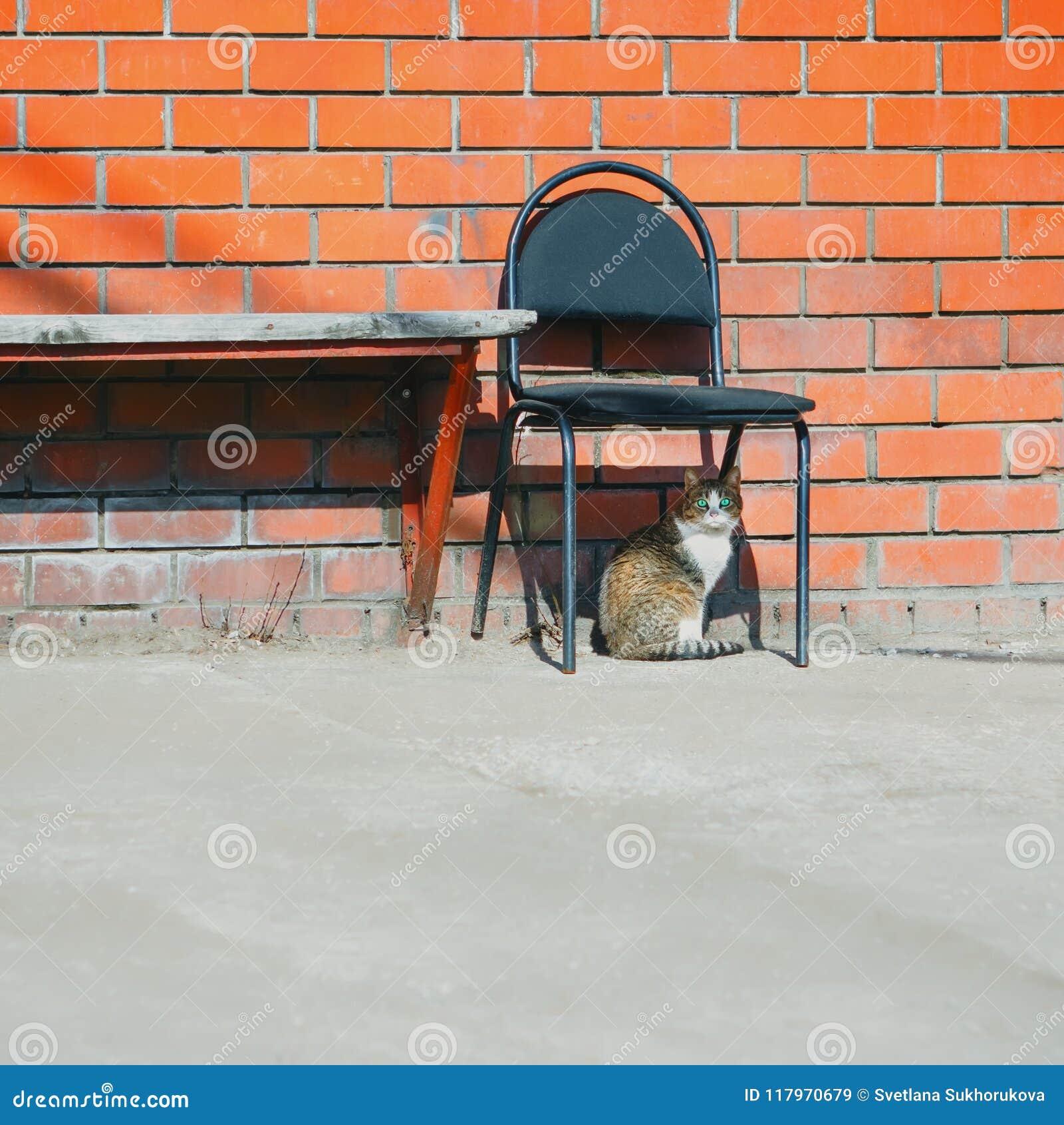 Parede de tijolo de Cat And Abandoned Chair Near da rua