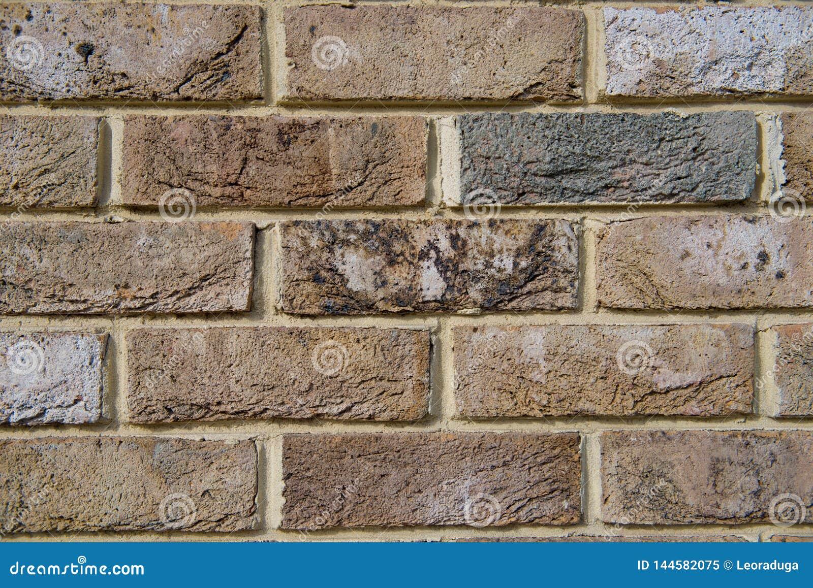 Parede de tijolo naughty