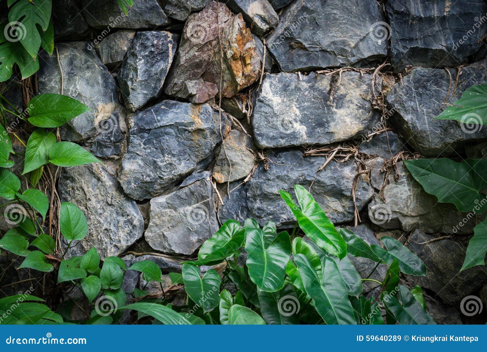Paredes de piedra del vintage en el botanica foto de - Paredes de piedra ...