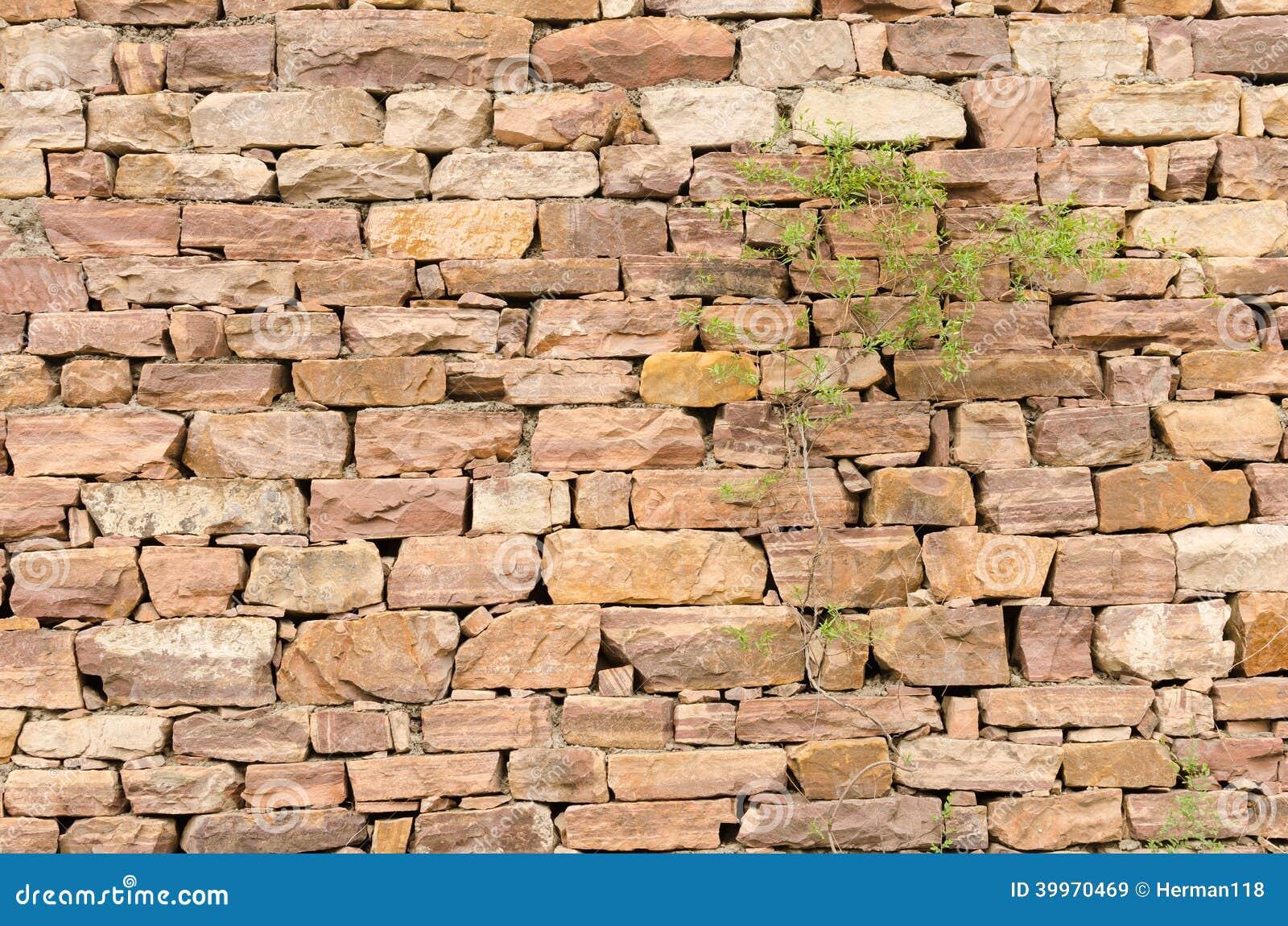 Paredes de piedra plantas imagen de archivo imagen de - Paredes de piedra ...