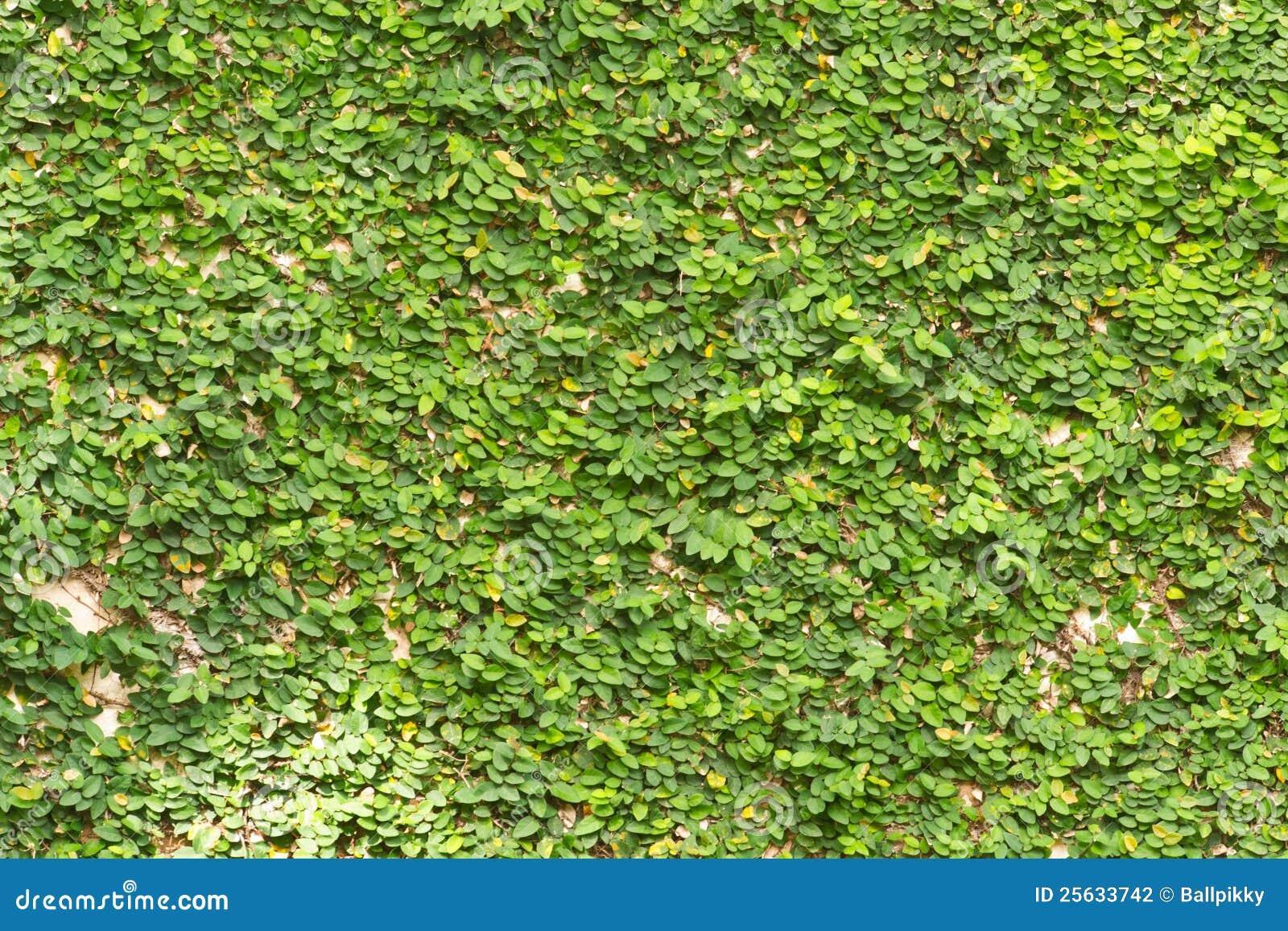 Paredes verdes fotografia de stock imagem 25633742 Plantas para paredes verdes
