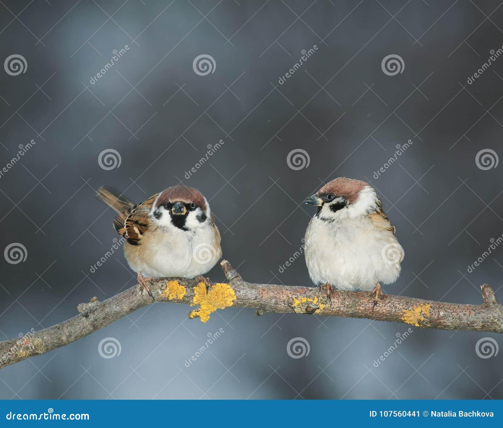 Pares de amantes de los pájaros que se sientan en una rama en el jardín