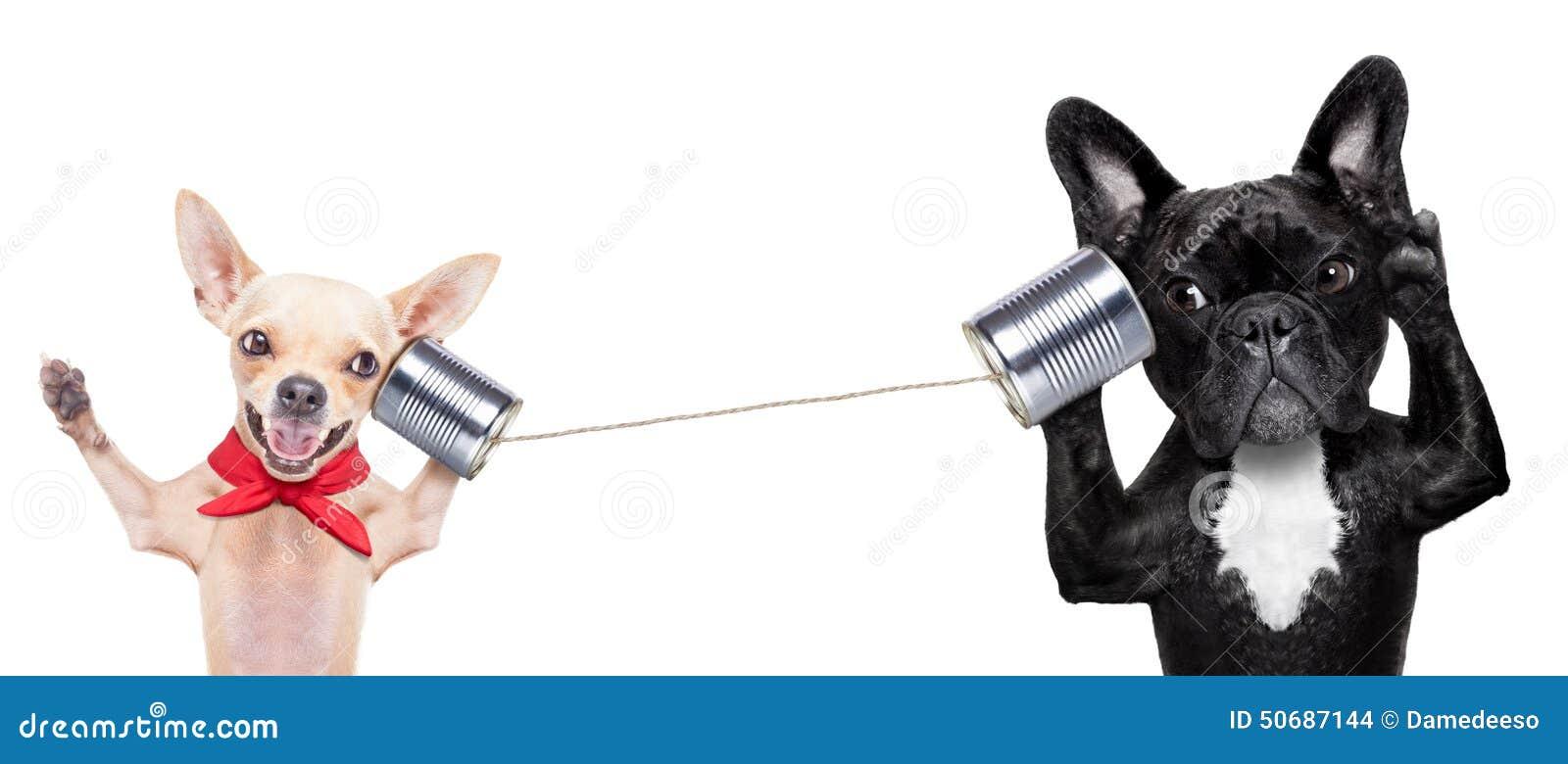 Pares de cães no telefone