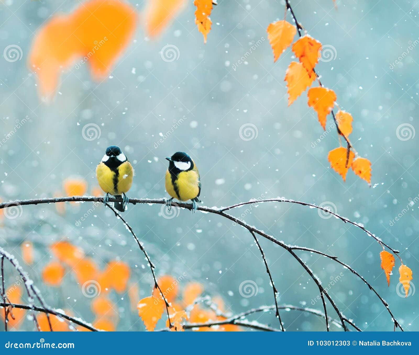 Pares de los Tits lindos de los pájaros en el parque que se sienta en una rama entre