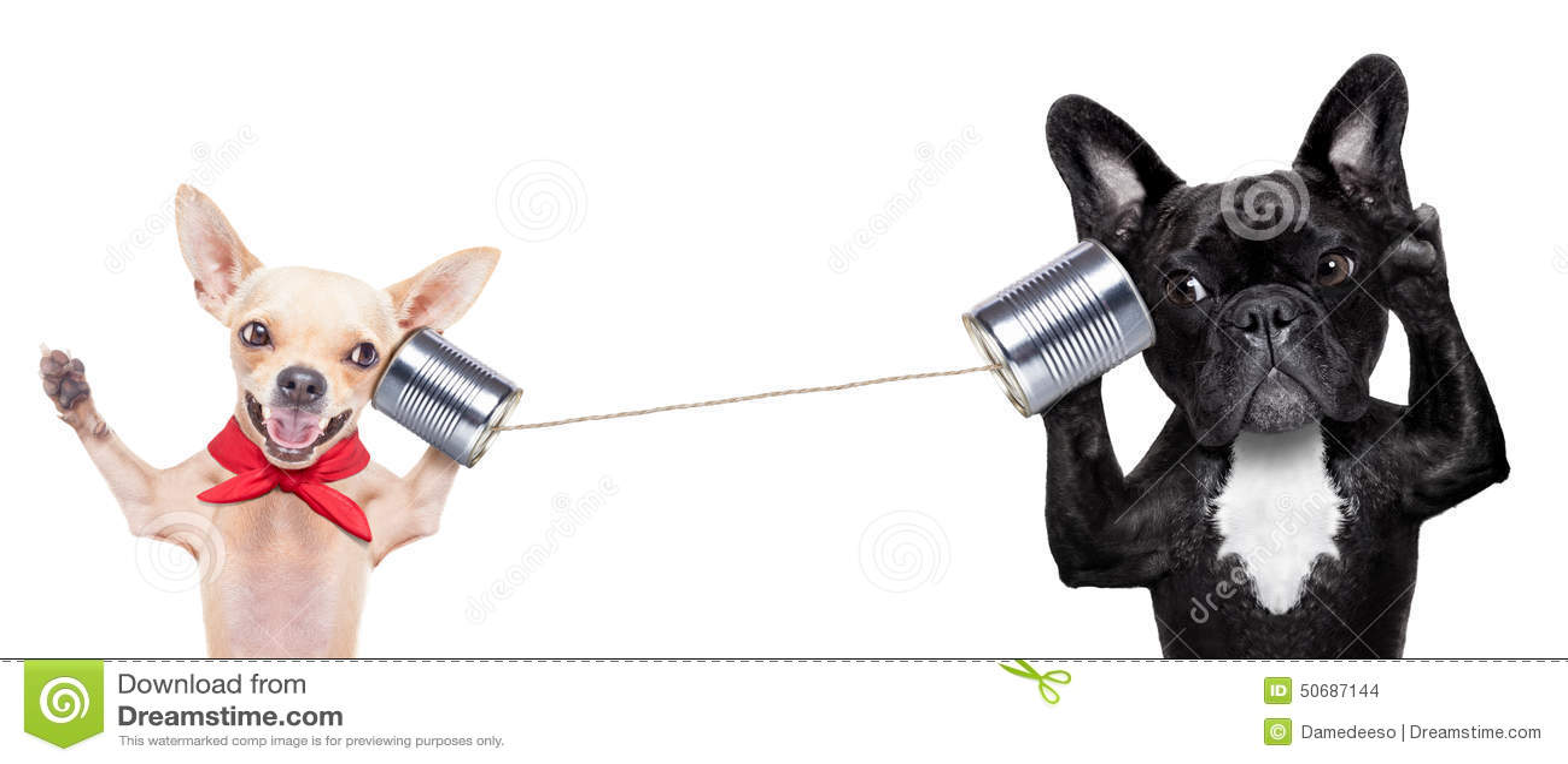 Pares de perros en el teléfono