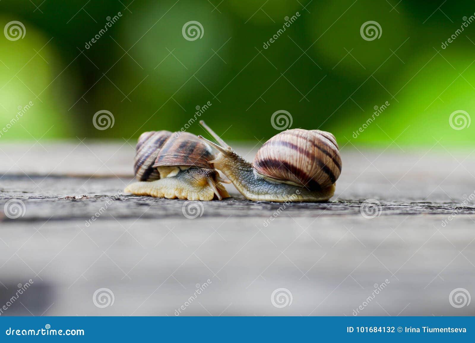 Pares del caracol Analogía del amor del caracol