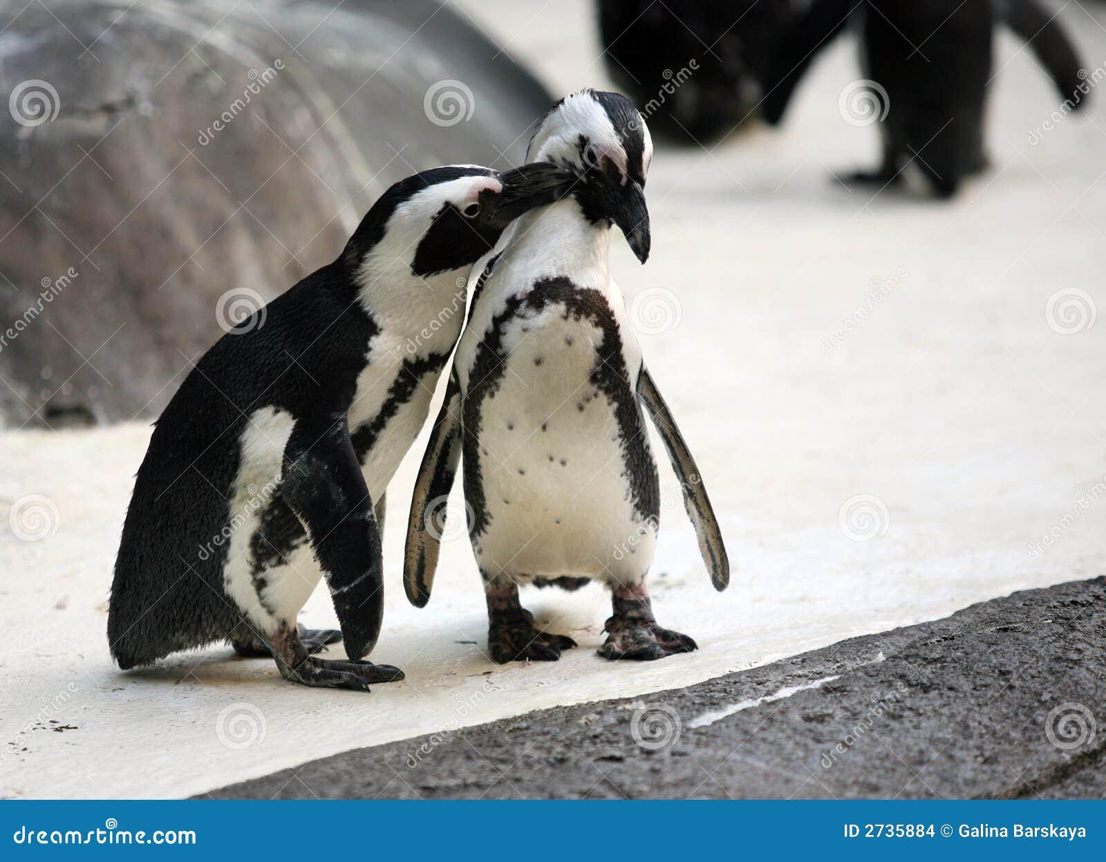 Pares del pingüino