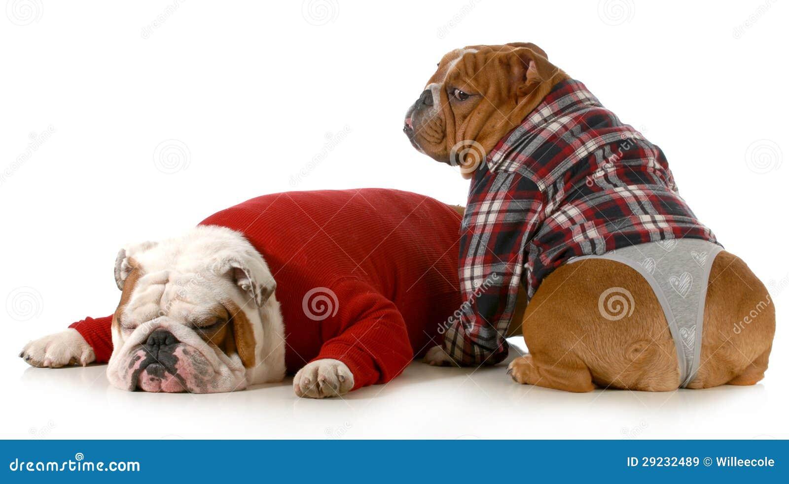 Download Pares do cão imagem de stock. Imagem de roupa, adorable - 29232489
